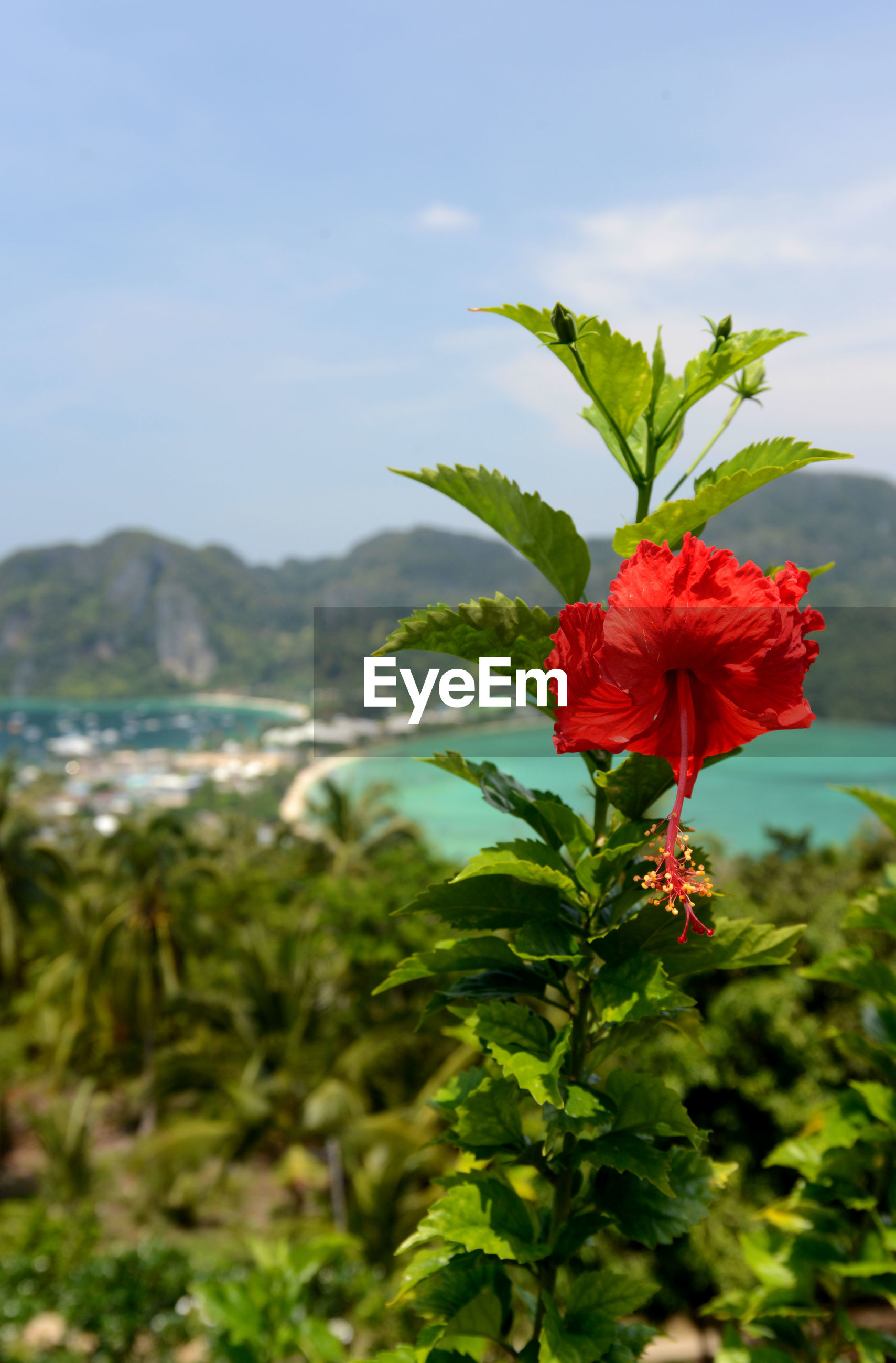beauty in nature, flower, nature, growth, red, green color, fragility, plant, focus on foreground, day, freshness, outdoors, hibiscus, no people, flower head, blooming, leaf, close-up, zinnia