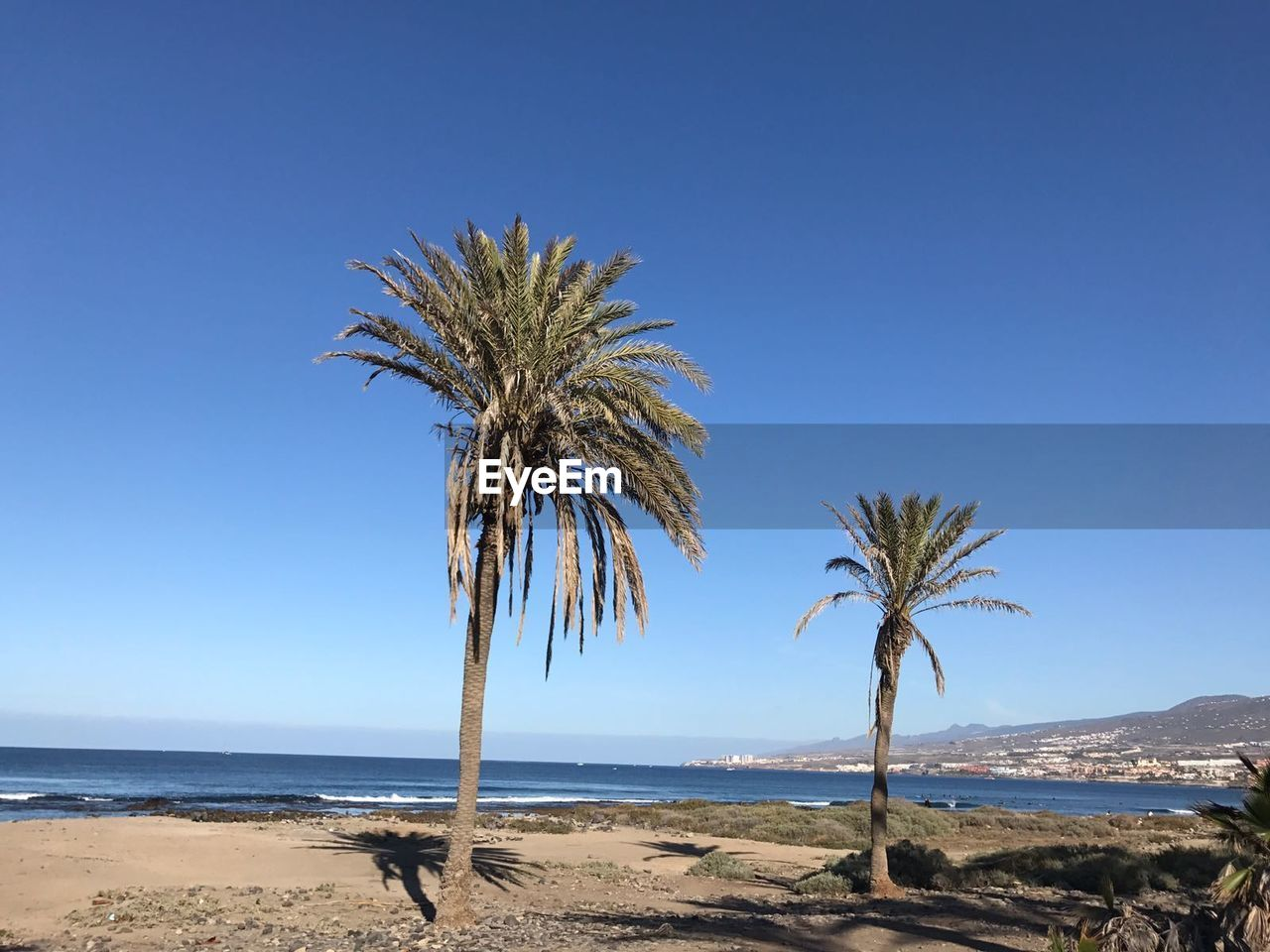 palm tree, sea, tranquil scene, nature, scenics, beach, clear sky, tranquility, horizon over water, day, beauty in nature, water, outdoors, no people, tree, sky, landscape