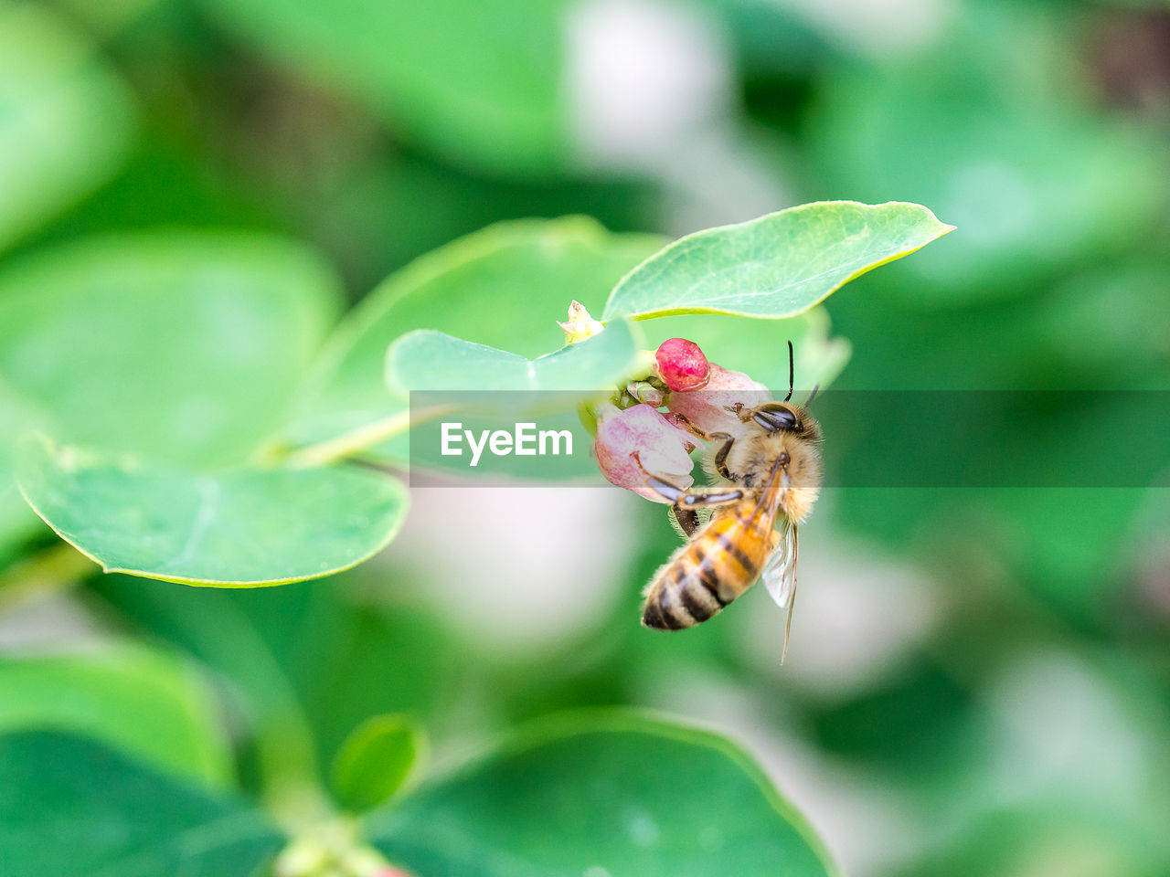 invertebrate, insect, animals in the wild, animal wildlife, plant part, leaf, animal themes, animal, plant, close-up, one animal, green color, beauty in nature, no people, nature, focus on foreground, day, growth, flower, selective focus, animal wing, outdoors, pollination, flower head