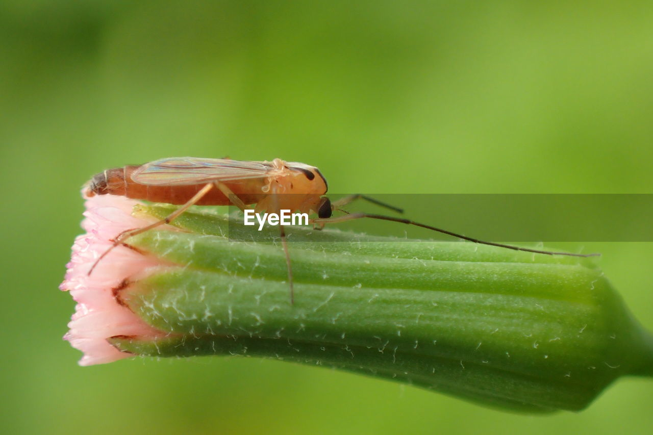 invertebrate, insect, green color, one animal, animal wildlife, animals in the wild, animal, animal themes, close-up, plant part, leaf, no people, selective focus, nature, day, plant, animal body part, focus on foreground, animal antenna, zoology, animal eye