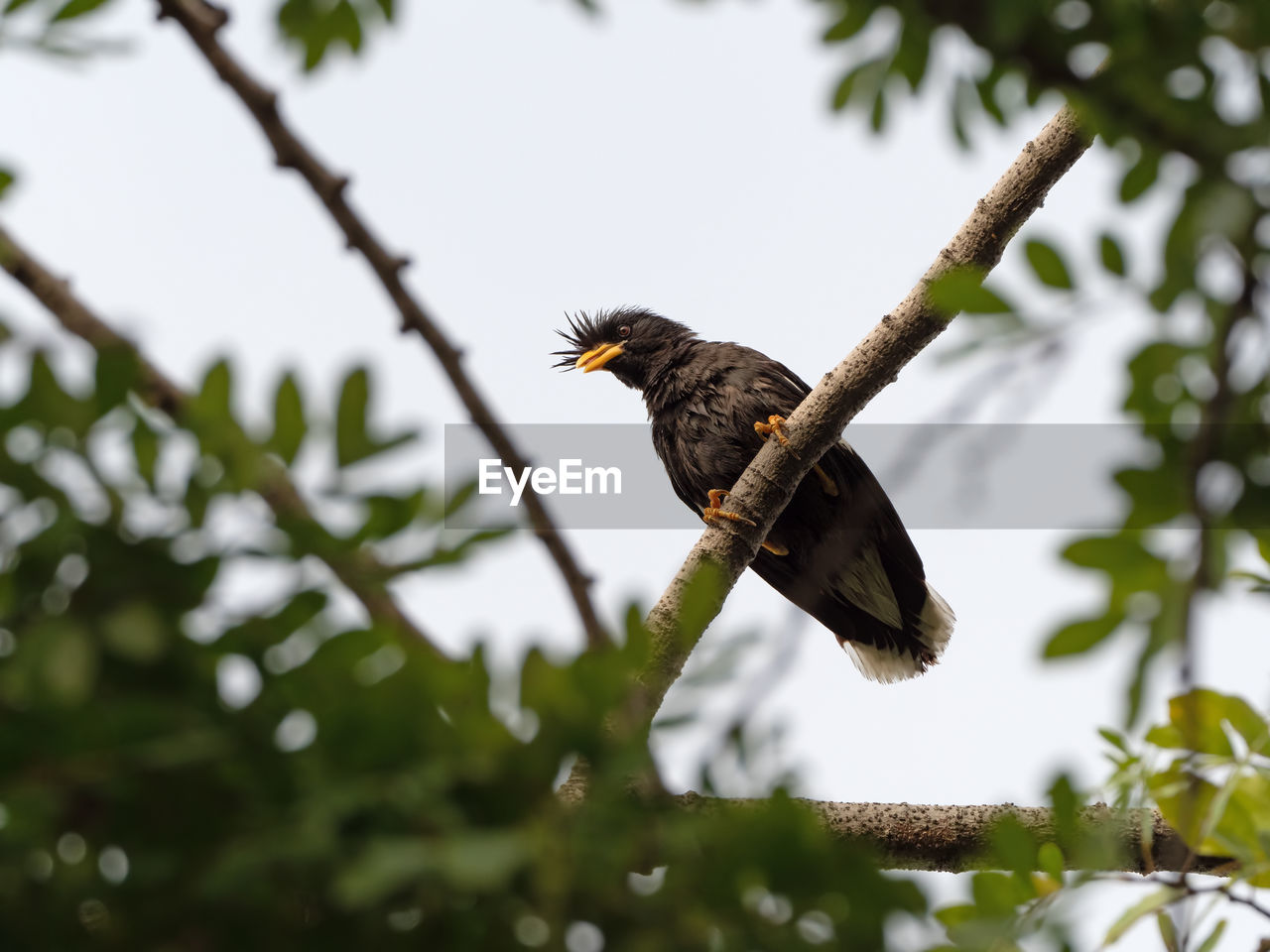 animal wildlife, animal themes, animal, one animal, animals in the wild, bird, vertebrate, plant, tree, low angle view, branch, nature, perching, no people, day, selective focus, sky, spread wings, outdoors, eagle