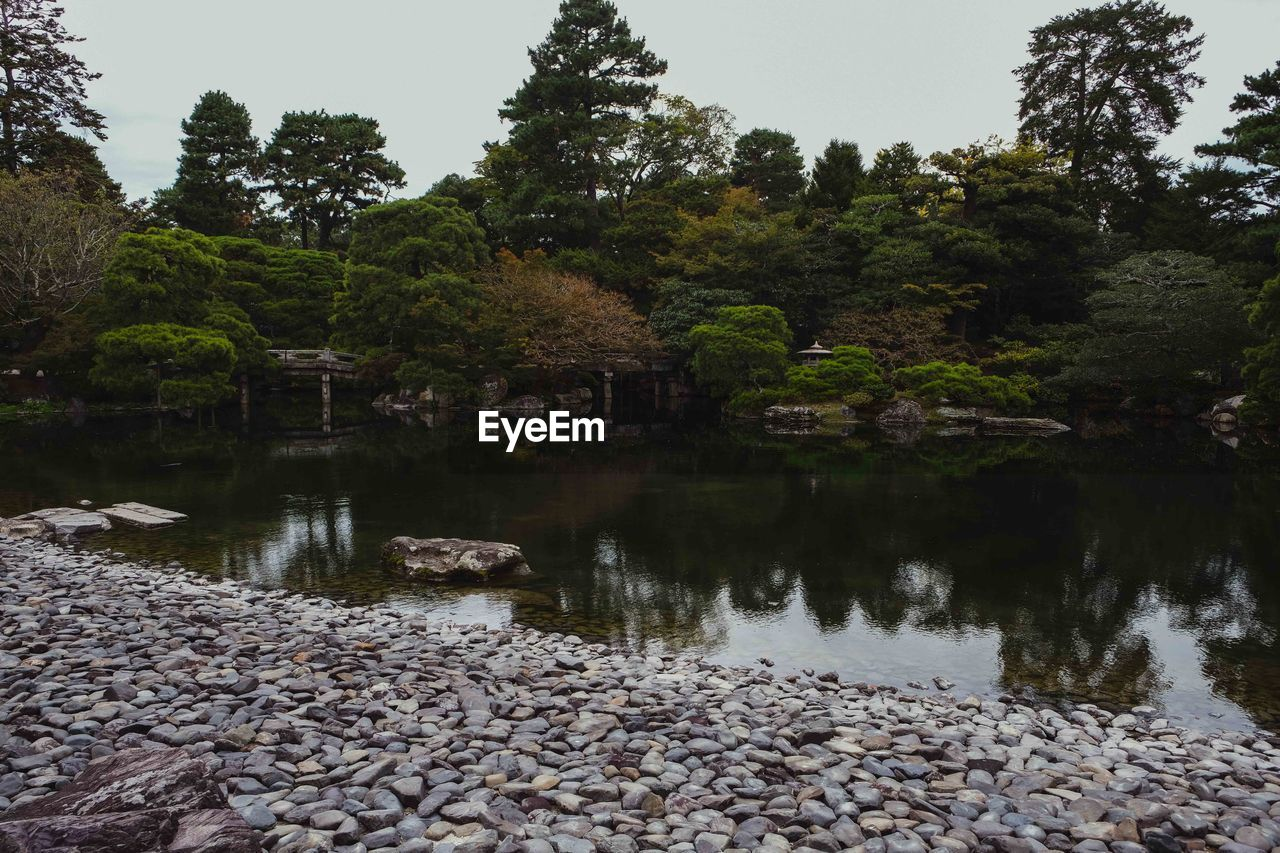 water, tree, plant, lake, rock, tranquility, solid, nature, reflection, beauty in nature, stone - object, rock - object, no people, tranquil scene, stone, scenics - nature, growth, day, forest, outdoors, pebble
