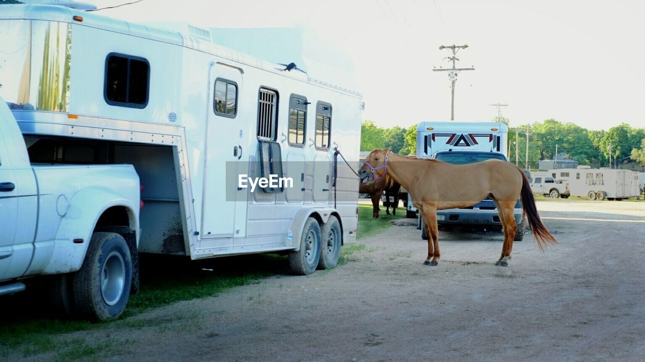Brown Horse Tied On Motor Home On Road