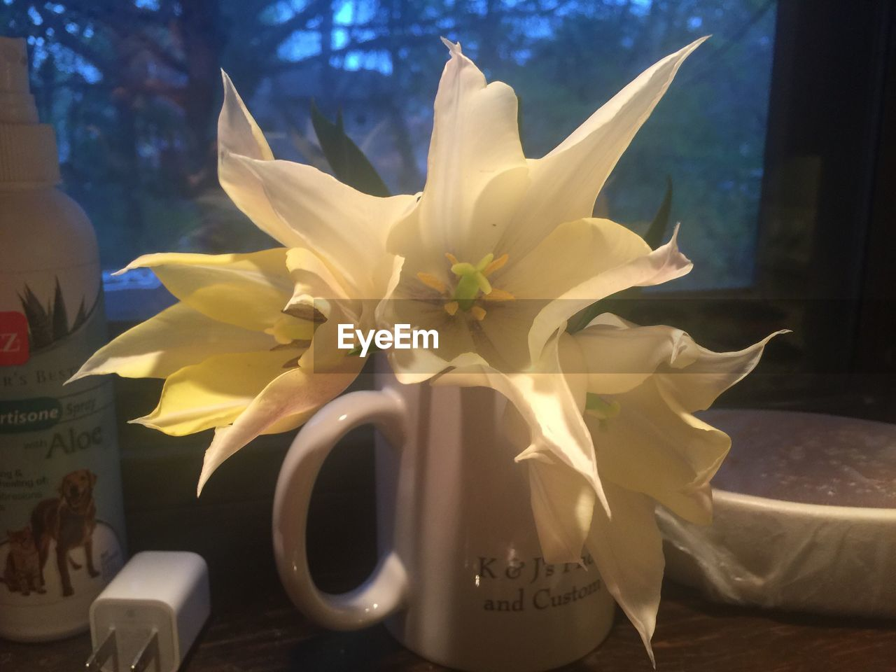 flower, petal, fragility, no people, close-up, flower head, day, nature, indoors, freshness, beauty in nature