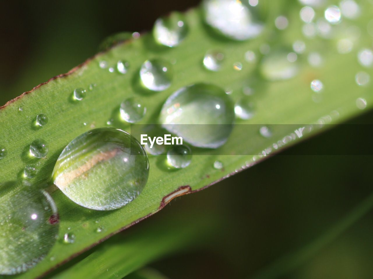 drop, leaf, green color, nature, water, close-up, growth, wet, no people, plant, beauty in nature, selective focus, freshness, fragility, day, raindrop, outdoors