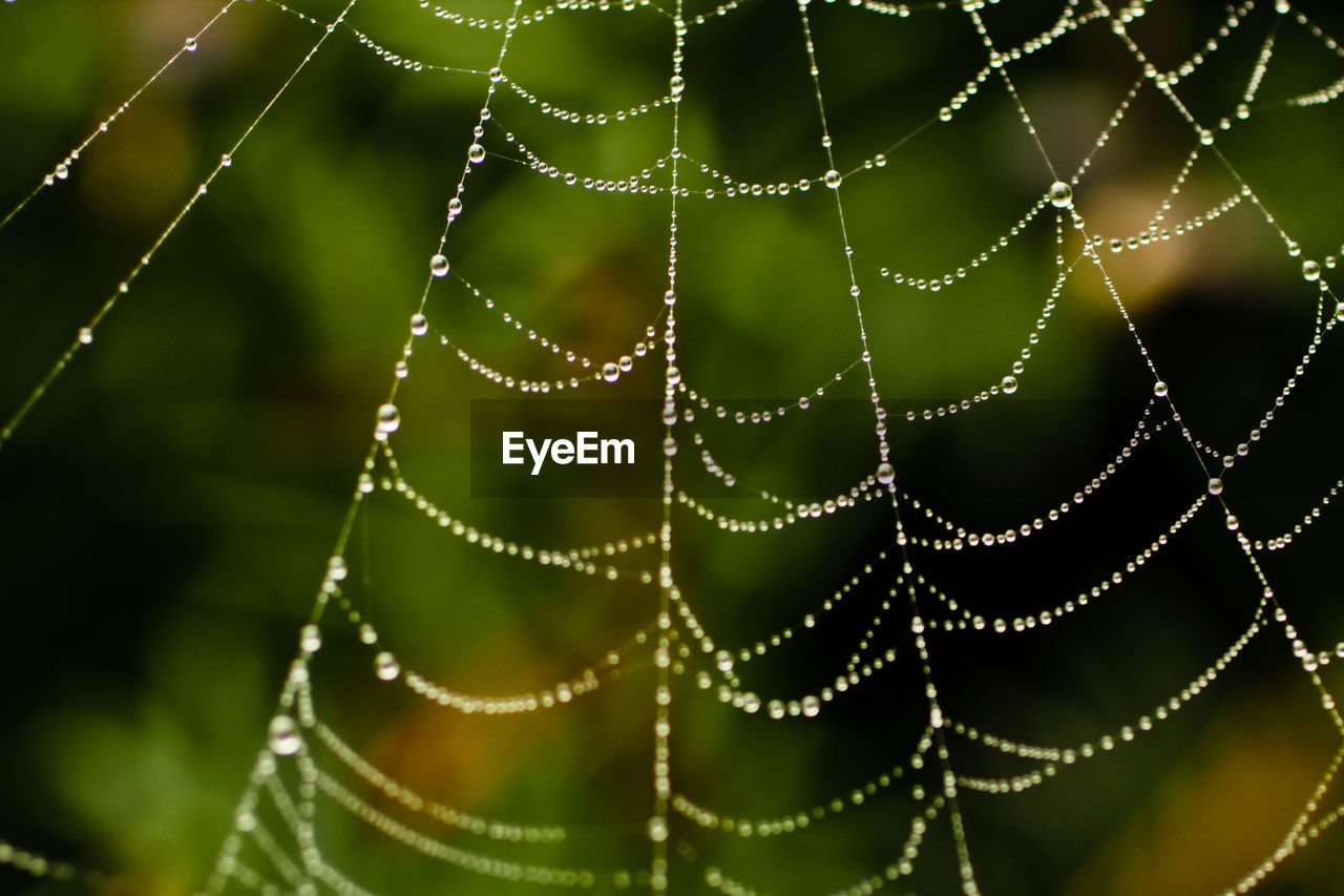 Close-Up Of Wet Spider Web On Field