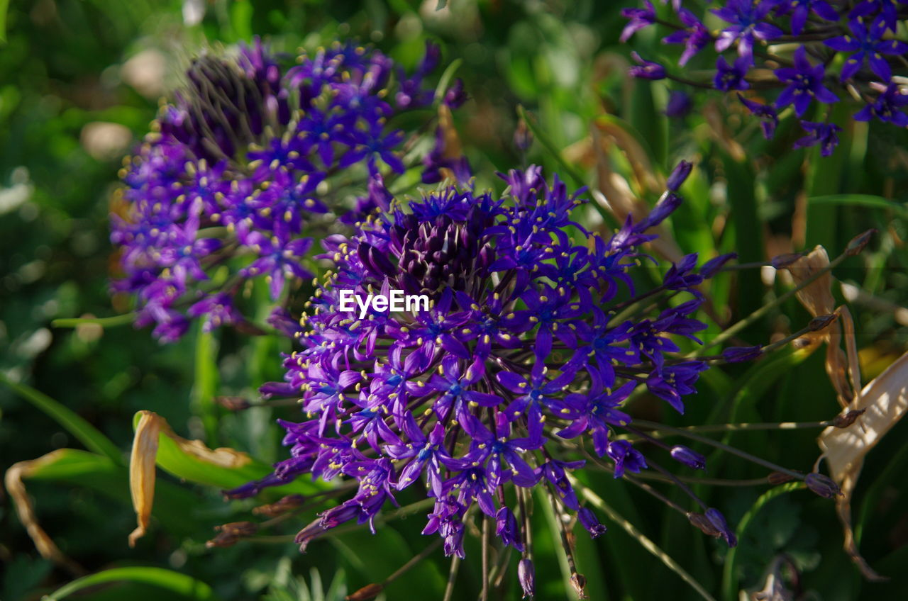 flowering plant, flower, purple, plant, invertebrate, vulnerability, fragility, beauty in nature, animals in the wild, insect, animal themes, one animal, freshness, animal wildlife, petal, growth, animal, bee, flower head, close-up, pollination, no people, lavender