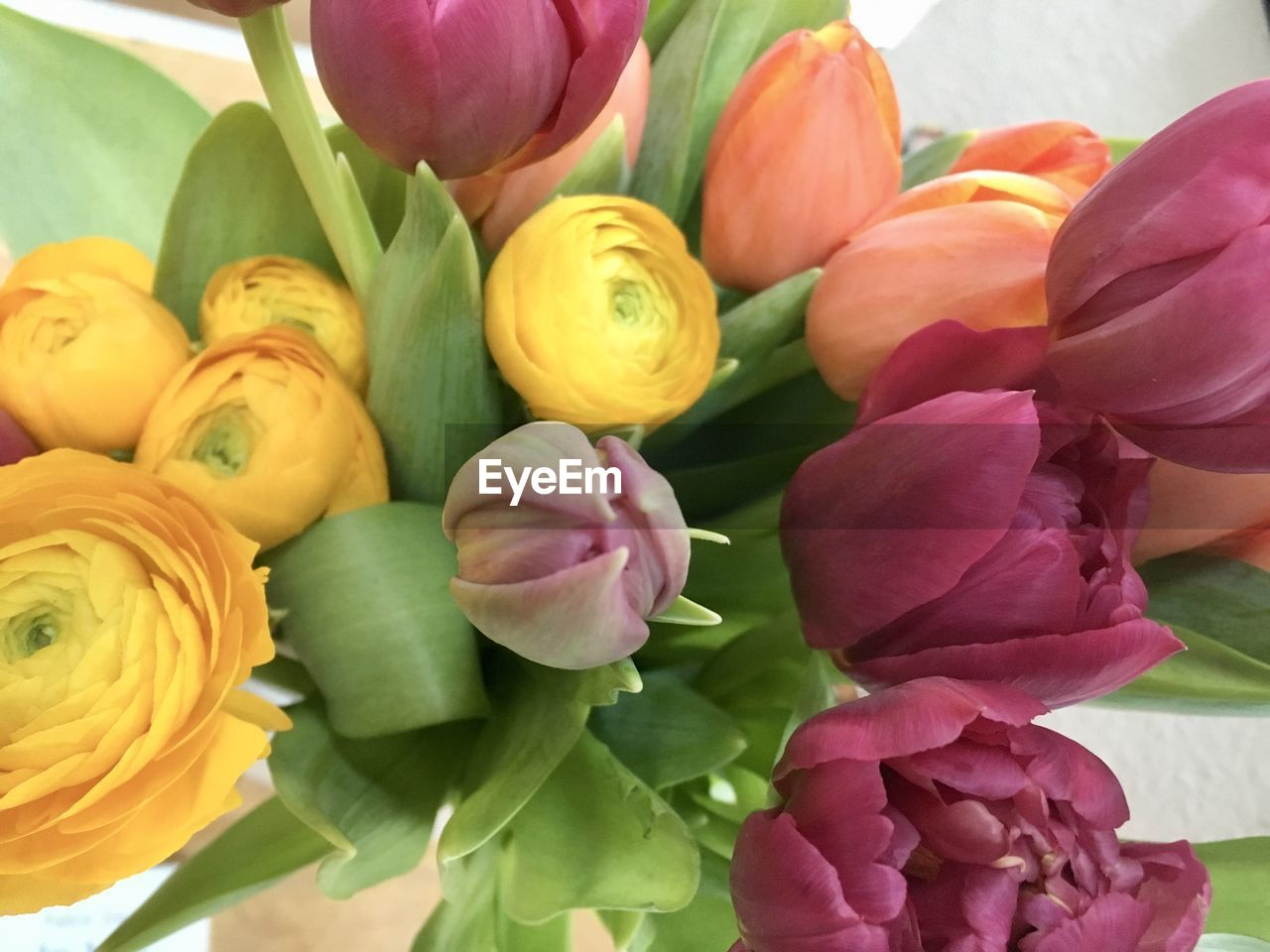 flower, petal, freshness, fragility, beauty in nature, multi colored, flower head, tulip, pink color, nature, no people, day, close-up, leaf, indoors