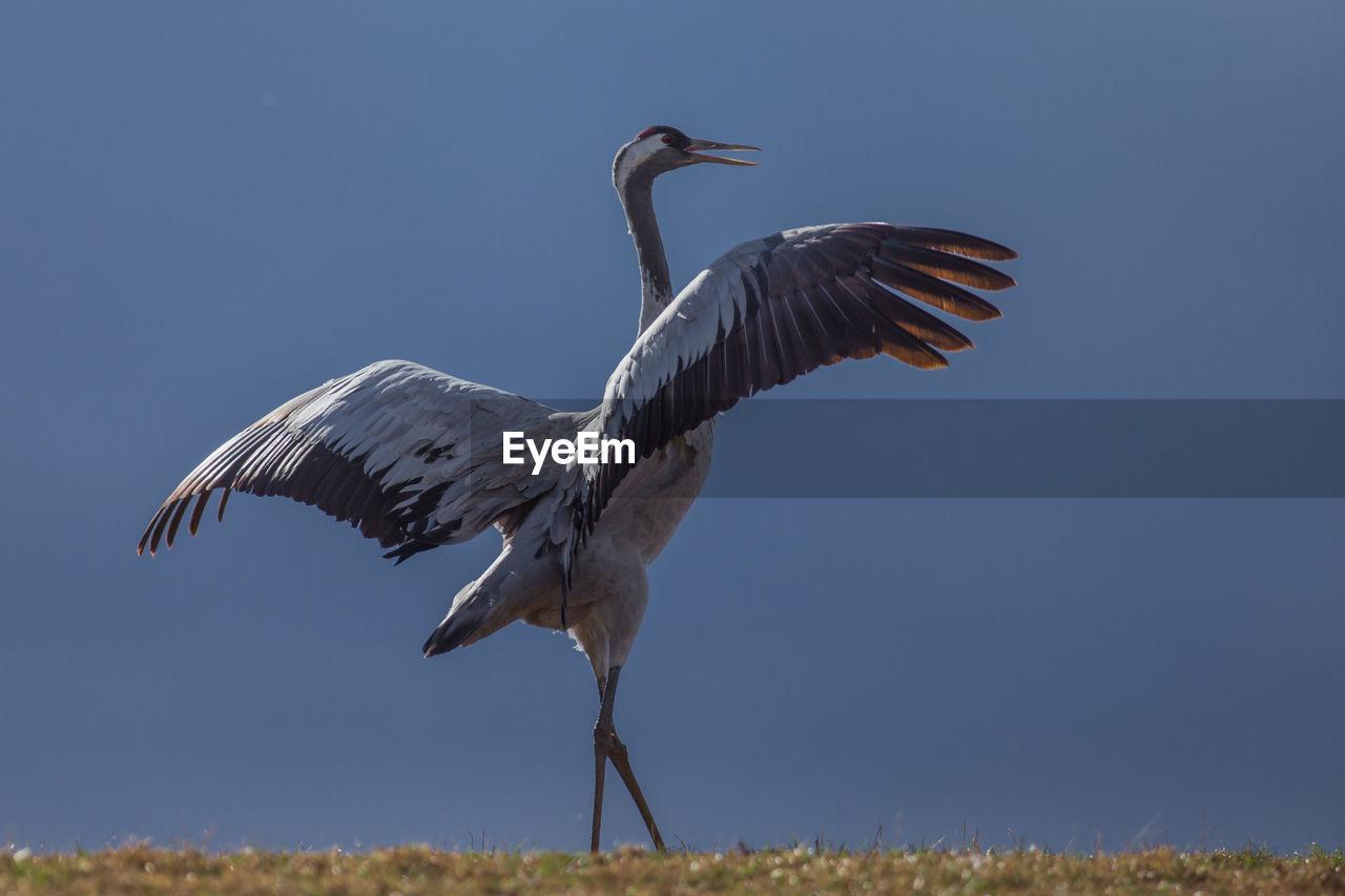 Crane on field against blue sky