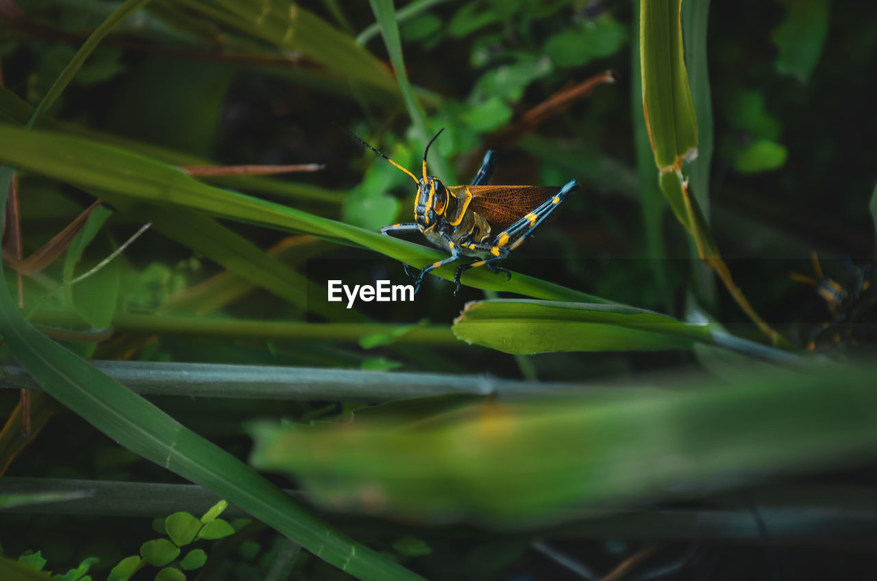 animal wildlife, invertebrate, insect, one animal, animals in the wild, animal themes, animal, green color, plant, nature, close-up, plant part, no people, selective focus, leaf, day, beauty in nature, growth, grass, animal wing, outdoors, blade of grass, butterfly - insect