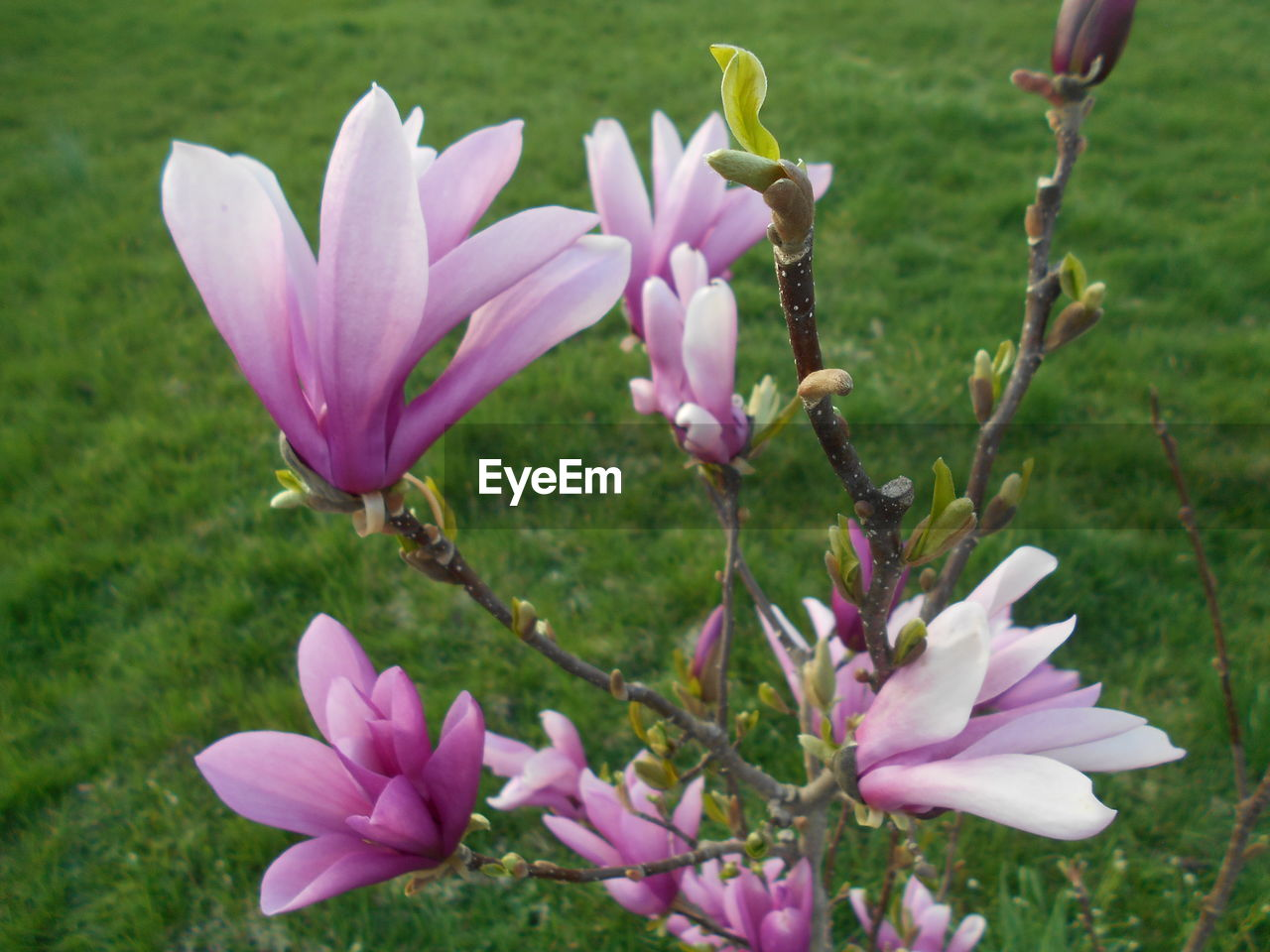 flowering plant, flower, plant, freshness, beauty in nature, vulnerability, fragility, growth, petal, pink color, close-up, flower head, inflorescence, nature, no people, day, focus on foreground, purple, field, outdoors, pollen, crocus
