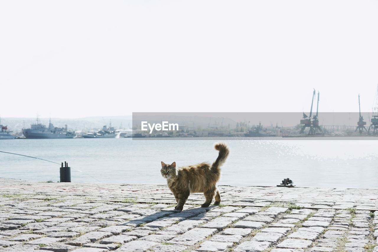 Cat Standing On Promenade Against Clear Sky
