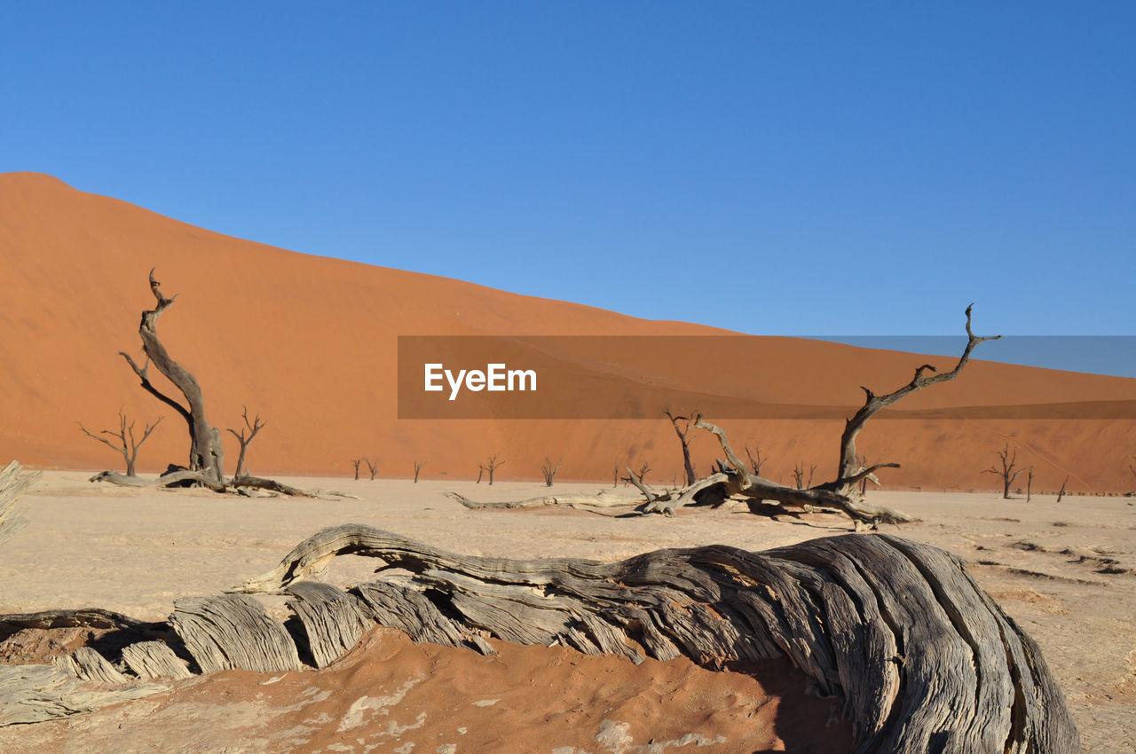 Dead Trees At Namib Desert