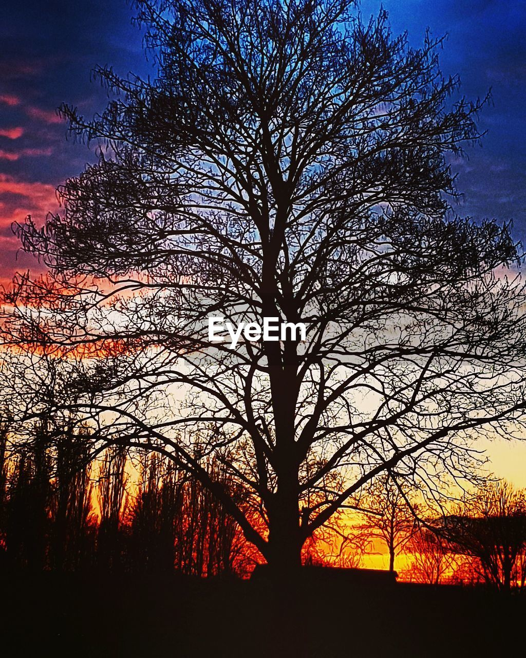 tree, bare tree, sunset, silhouette, orange color, tranquil scene, beauty in nature, nature, tranquility, branch, scenics, sky, majestic, landscape, outdoors, tree trunk, no people, growth, forest, tree area, day