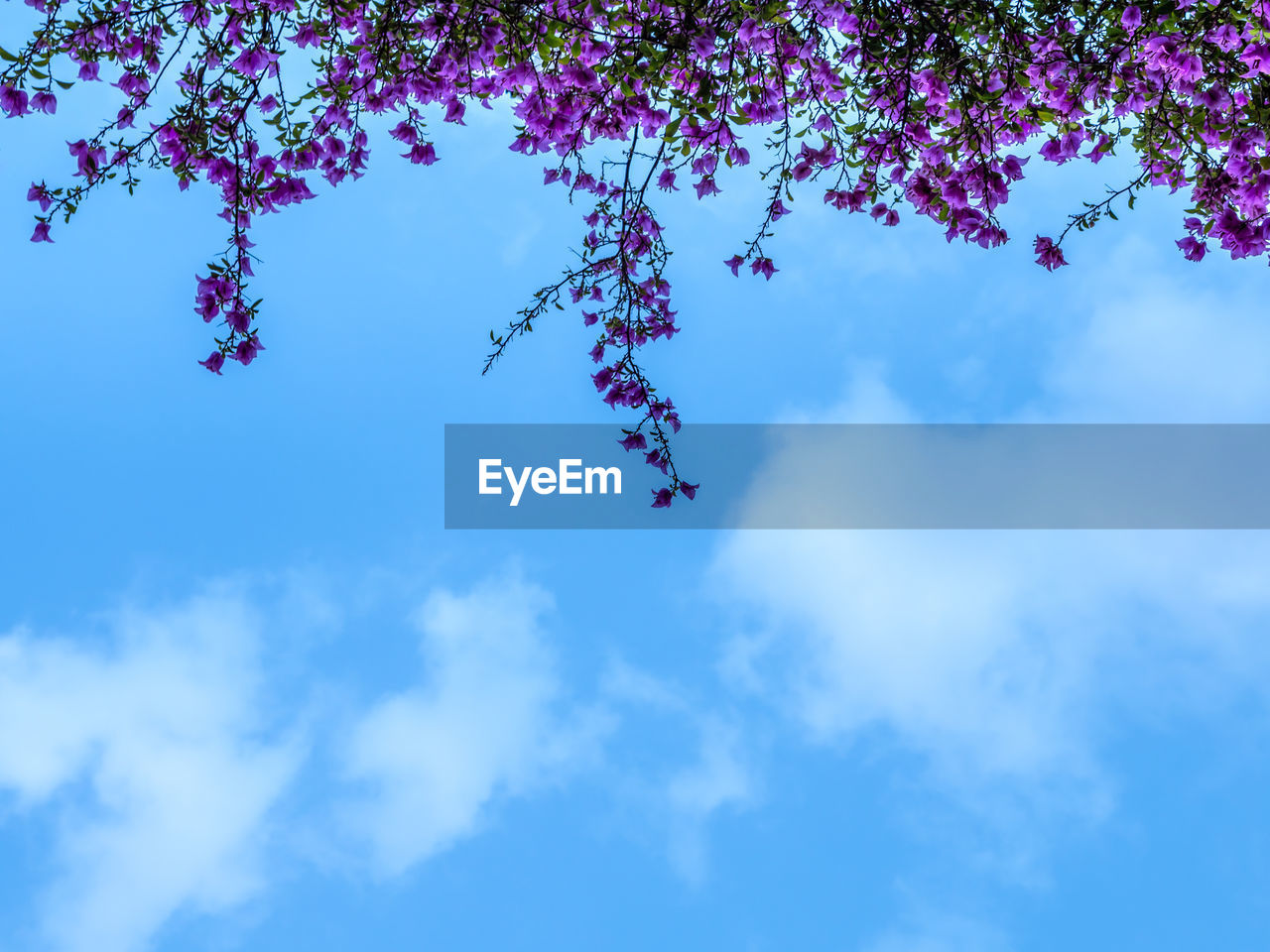 sky, cloud - sky, low angle view, beauty in nature, plant, nature, blue, growth, tranquility, day, no people, tree, branch, outdoors, flowering plant, flower, fragility, vulnerability, tranquil scene, scenics - nature, spring