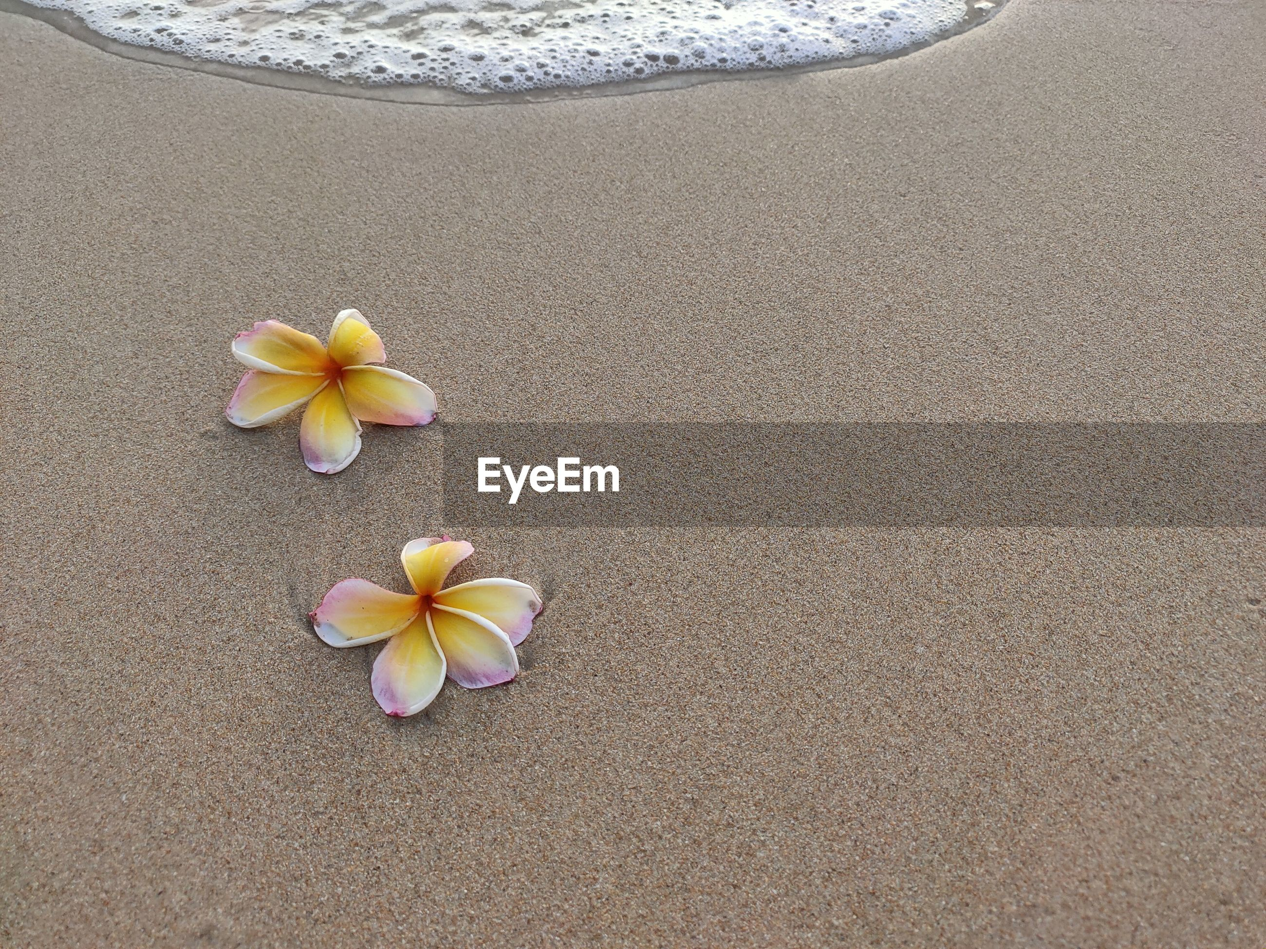 HIGH ANGLE VIEW OF FLOWERING PLANTS ON SAND