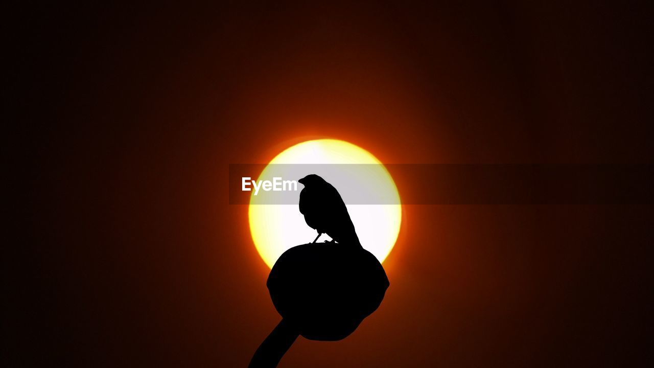 sun, sunset, silhouette, beauty in nature, orange color, nature, real people, scenics, sunlight, solar eclipse, outdoors, moon, yellow, sky, one person, clear sky, astronomy, close-up, people