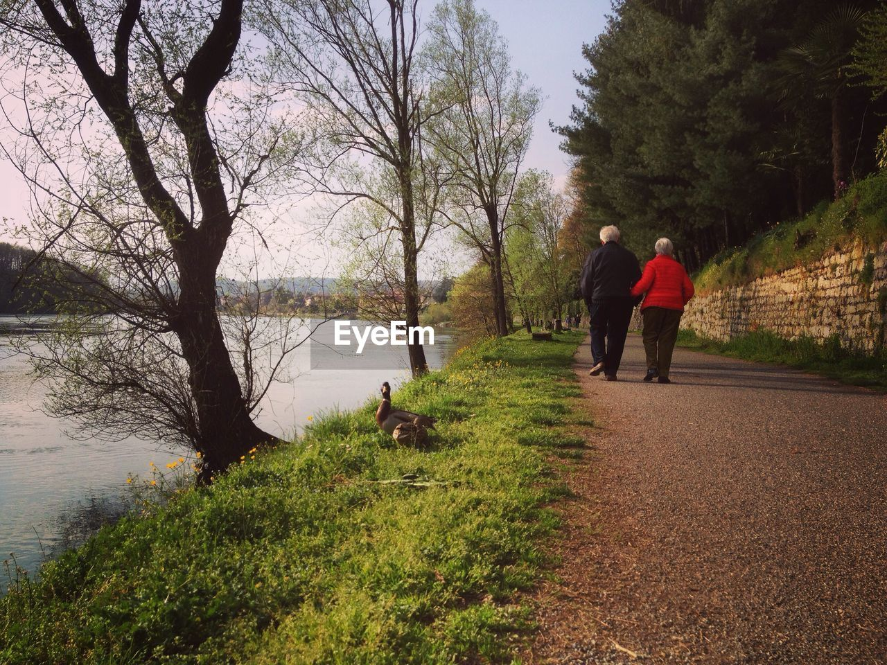 tree, rear view, plant, real people, togetherness, two people, men, women, adult, nature, water, leisure activity, full length, lifestyles, walking, people, day, bare tree, lake, outdoors, positive emotion, couple - relationship