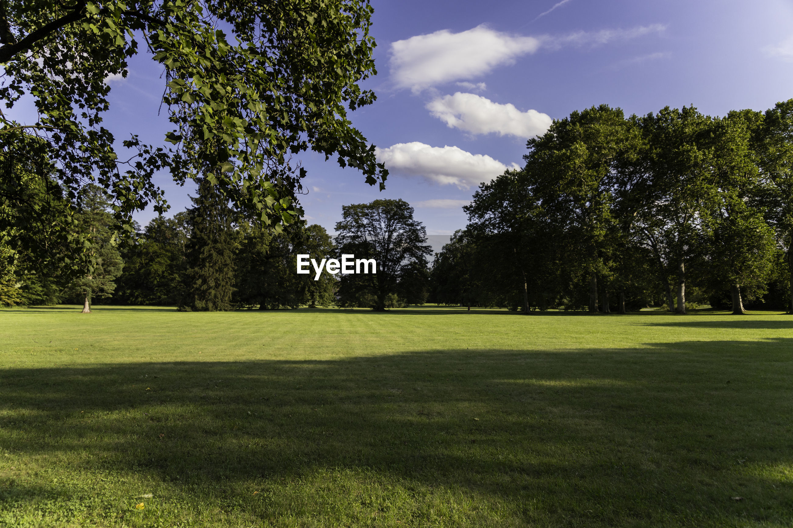 VIEW OF GOLF COURSE AGAINST TREES