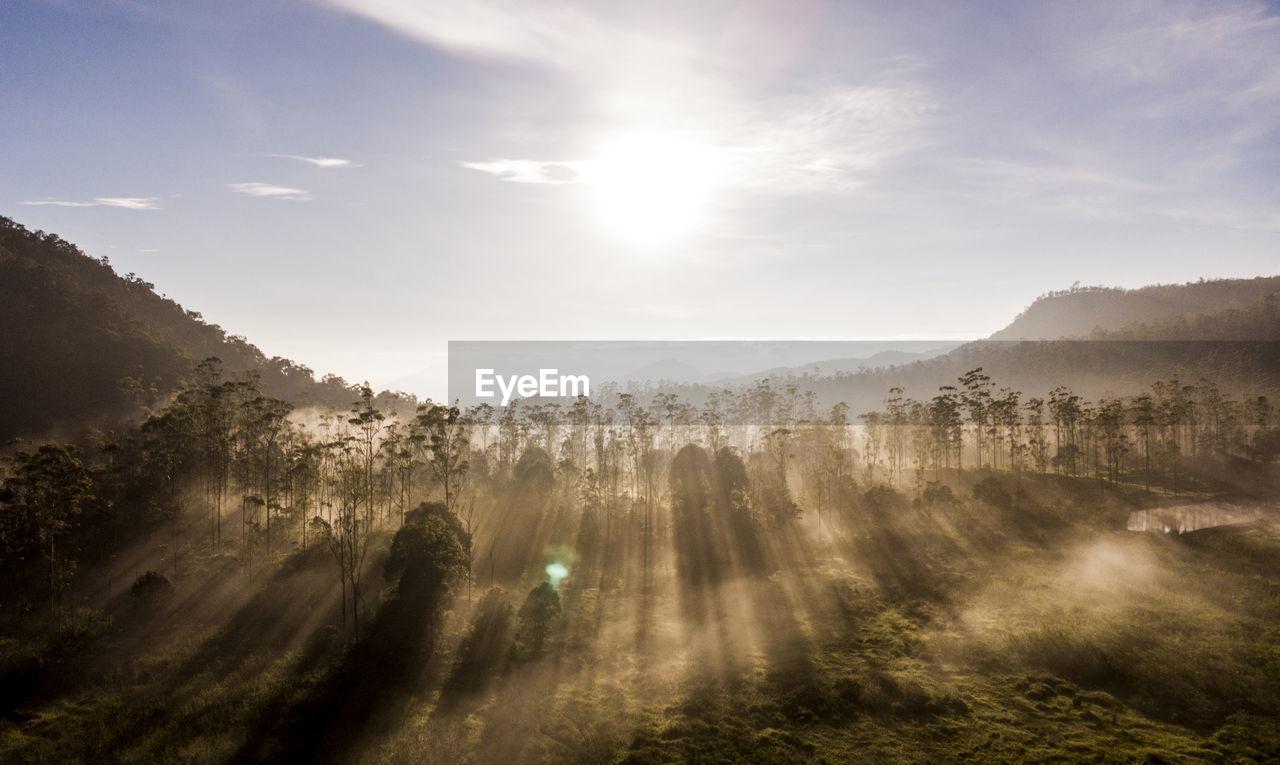 Sunlight Streaming Through Trees On Landscape Against Sky