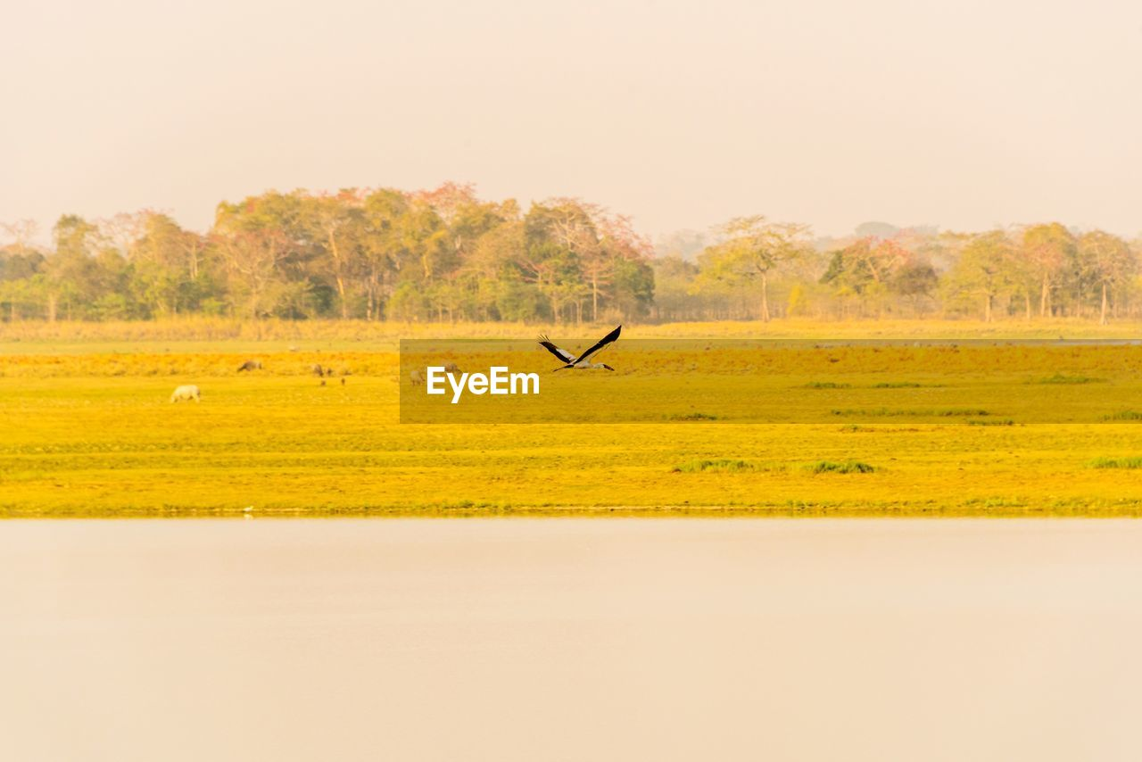 landscape, field, sky, environment, animal themes, nature, animal, scenics - nature, copy space, land, day, clear sky, no people, plant, one animal, beauty in nature, tree, animal wildlife, bird, vertebrate, outdoors