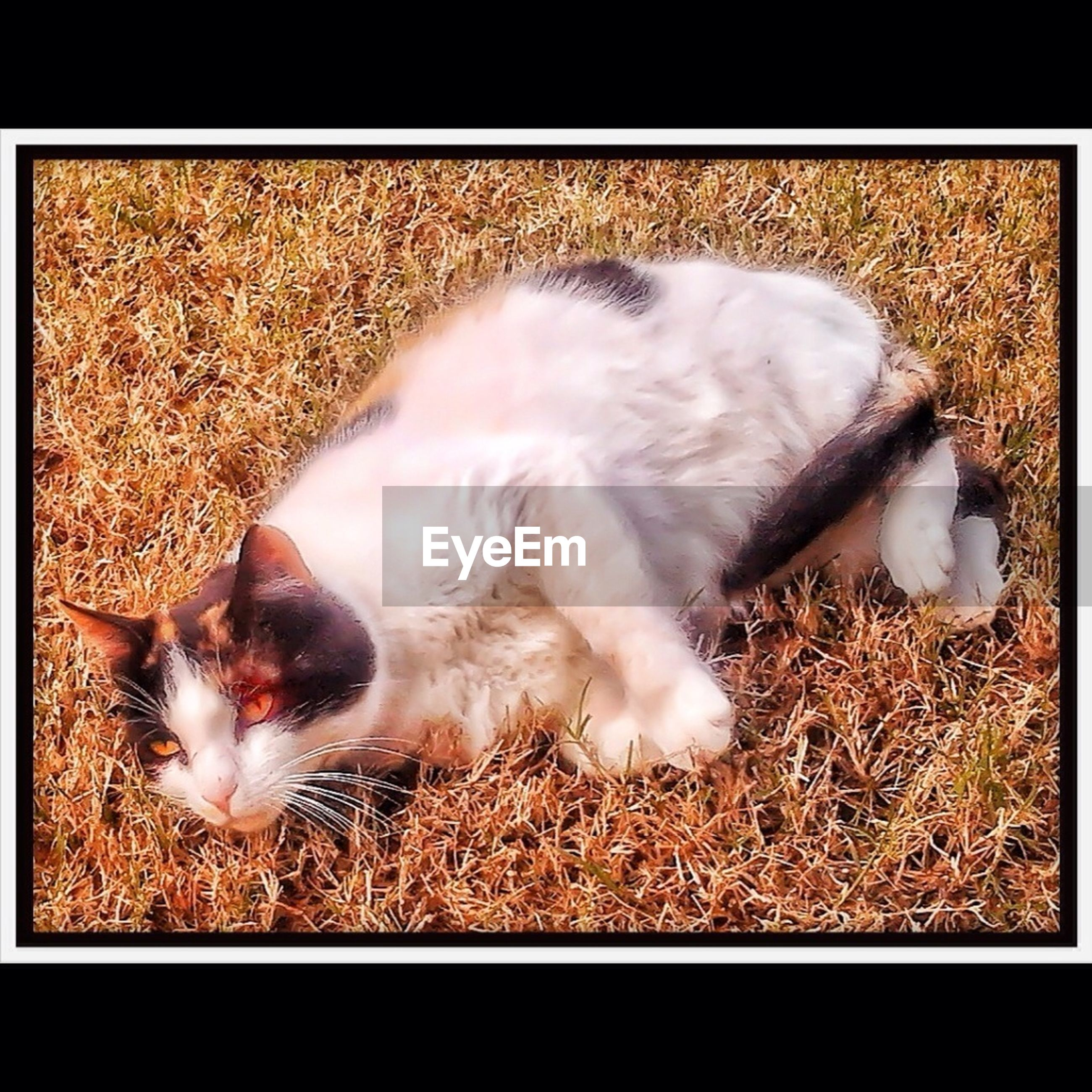 domestic animals, animal themes, pets, mammal, one animal, domestic cat, transfer print, cat, auto post production filter, lying down, relaxation, sleeping, resting, feline, high angle view, grass, field, dog, zoology, eyes closed