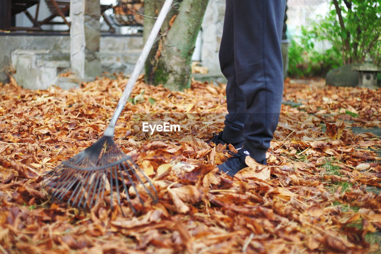 LOW SECTION OF MAN STANDING ON DRY AUTUMN LEAVES