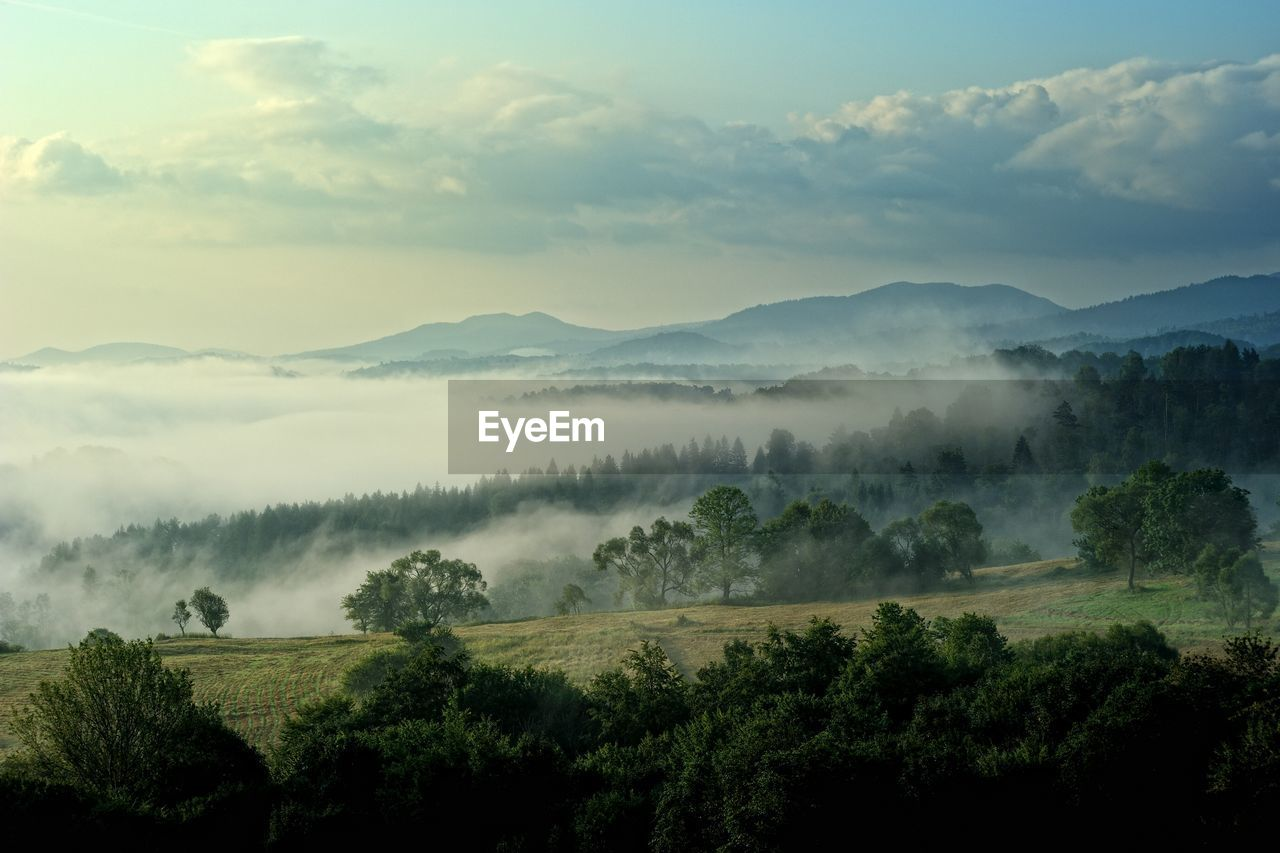 tree, beauty in nature, scenics - nature, tranquil scene, cloud - sky, tranquility, sky, fog, landscape, plant, environment, growth, nature, non-urban scene, no people, land, idyllic, mountain, day, outdoors, hazy