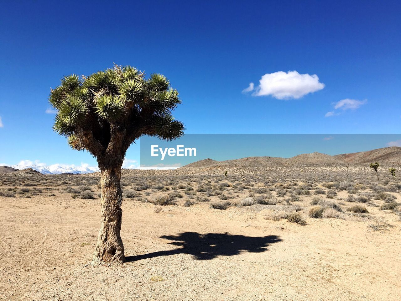 Scenic View Of Joshua Tree National Park Against Blue Sky During Sunny Day