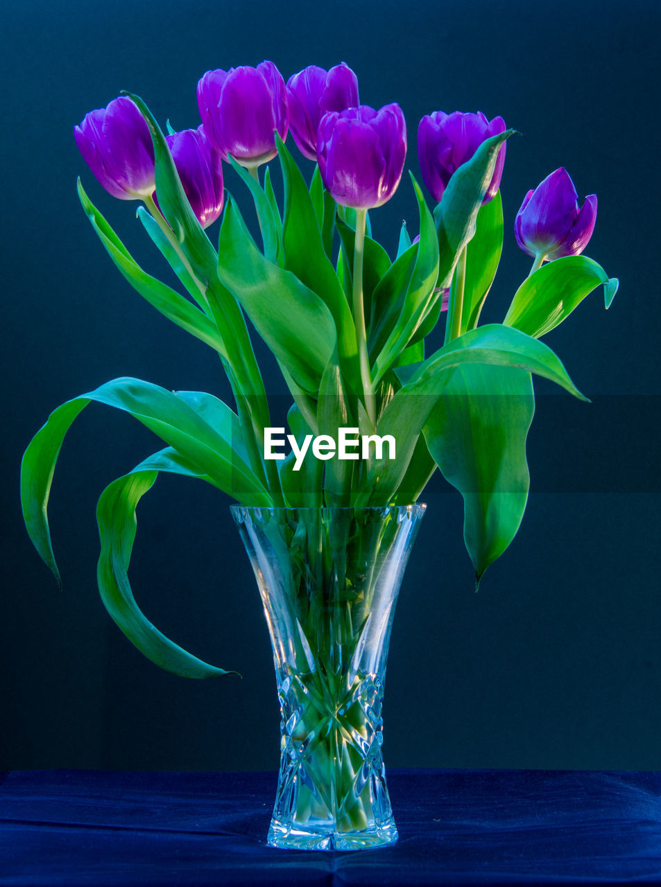 vase, flower, plant, flowering plant, indoors, vulnerability, beauty in nature, no people, close-up, nature, fragility, table, freshness, studio shot, petal, green color, water, glass - material, colored background, flower head, flower arrangement, glass, purple, black background, blue background, bouquet