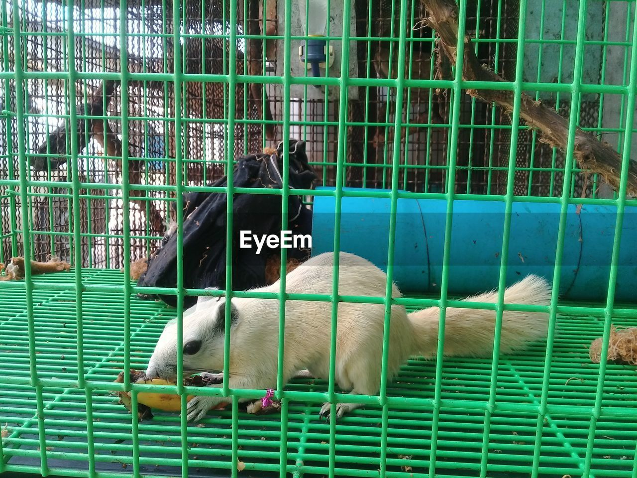pets, dog, domestic animals, animal themes, mammal, one animal, no people, green color, cage, puppy, day, close-up, outdoors