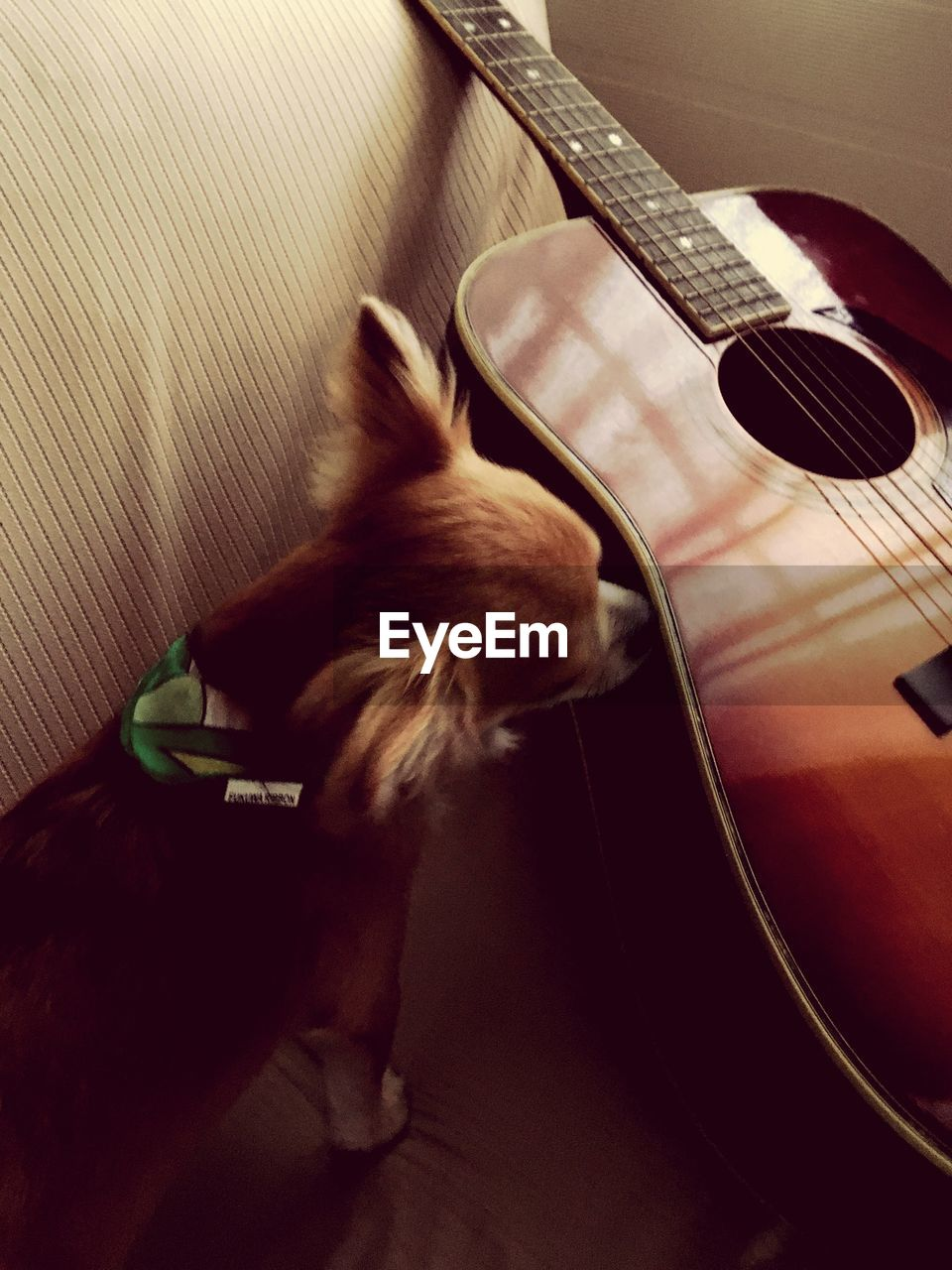 one animal, domestic animals, pets, animal themes, indoors, musical instrument, guitar, mammal, no people, music, musical instrument string, close-up, day