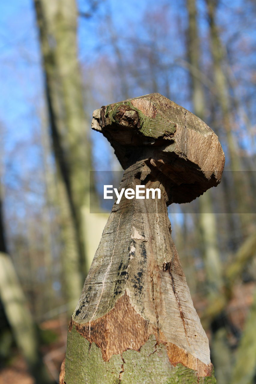 tree, focus on foreground, plant, tree trunk, trunk, day, nature, close-up, no people, forest, outdoors, wood - material, bark, land, mushroom, fungus, wood, textured, sunlight, growth, toadstool