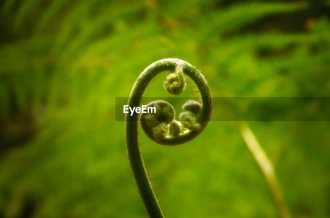 Close-Up Of Fern Growing On Field