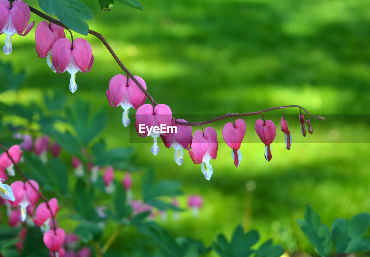 growth, nature, plant, beauty in nature, flower, fragility, pink color, petal, freshness, no people, outdoors, green color, day, leaf, close-up, springtime, blooming, branch, tree, flower head