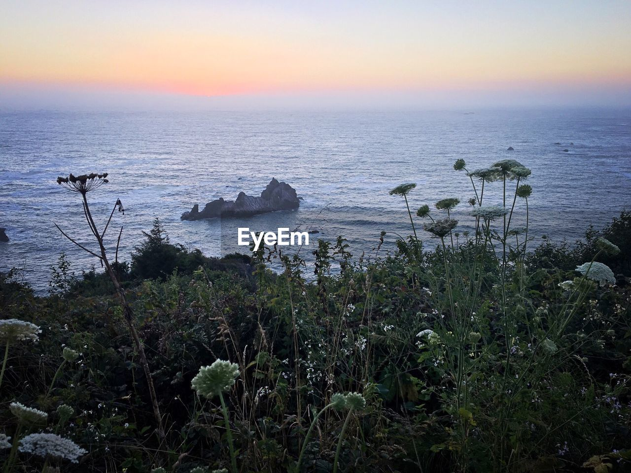 Plants growing against sea during sunset