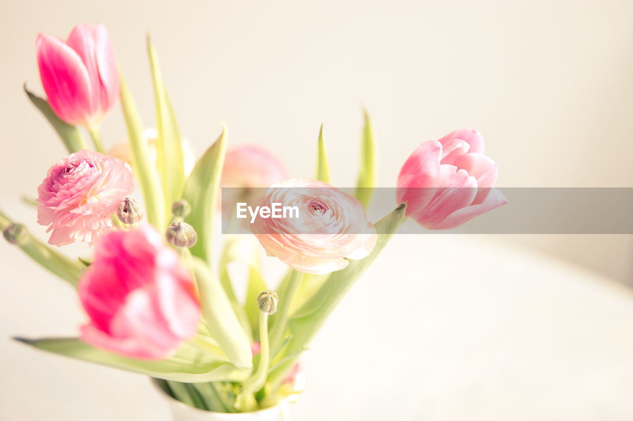 Close-Up Of Pink Flowers In Vase