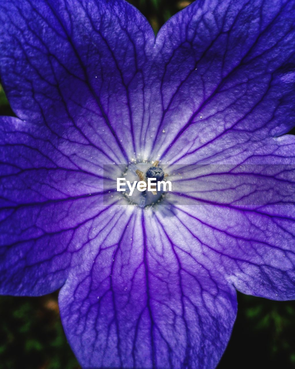 flower, flowering plant, purple, beauty in nature, plant, fragility, vulnerability, petal, growth, close-up, flower head, inflorescence, freshness, no people, nature, day, focus on foreground, outdoors, pollen