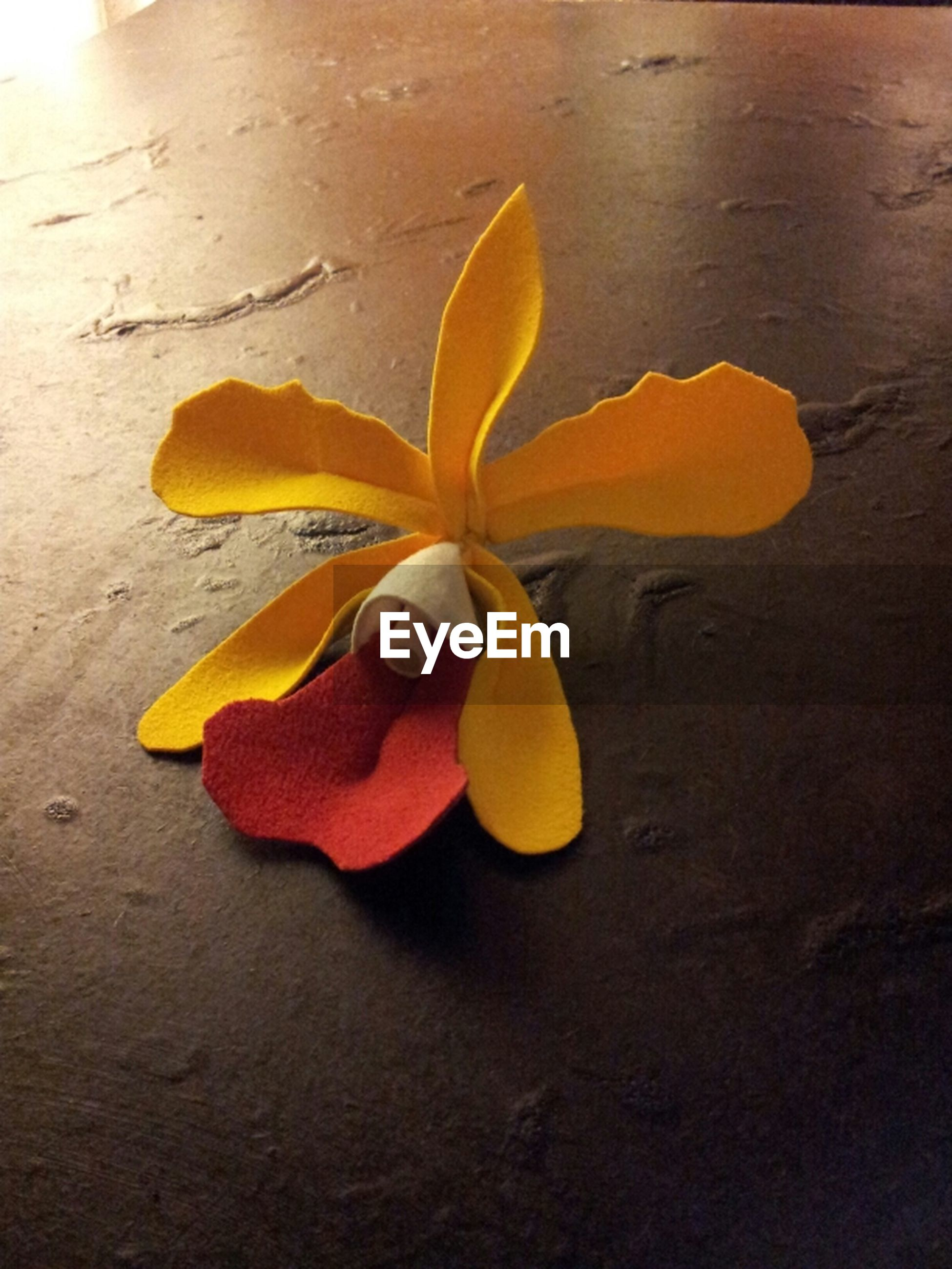 yellow, freshness, close-up, leaf, still life, high angle view, single object, fruit, table, shadow, nature, flower, no people, fragility, directly above, indoors, studio shot, orange color, autumn, beauty in nature