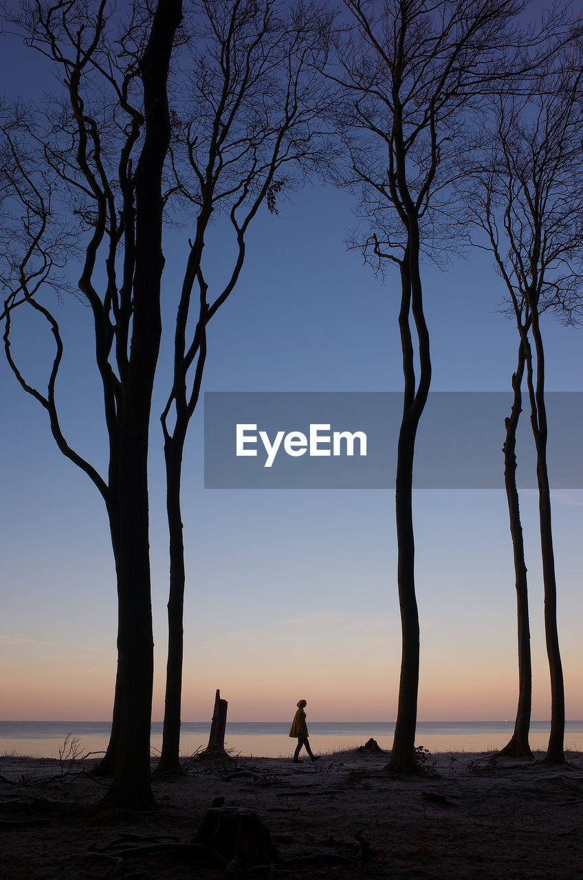 Silhouette person and trees at beach against clear sky during sunset
