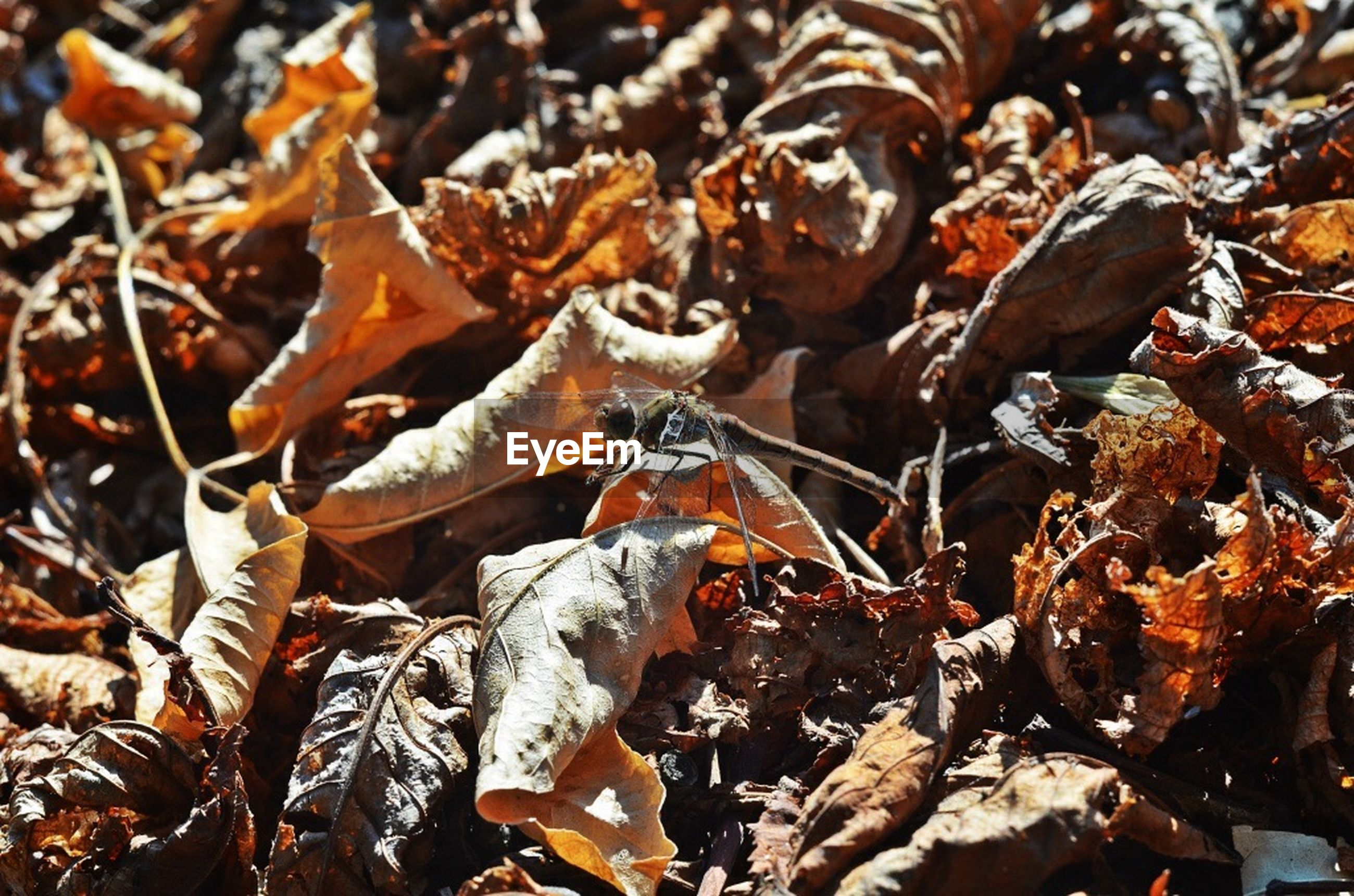 leaf, dry, close-up, autumn, nature, focus on foreground, day, outdoors, change, leaves, high angle view, no people, natural pattern, field, abundance, brown, season, fragility, growth, selective focus
