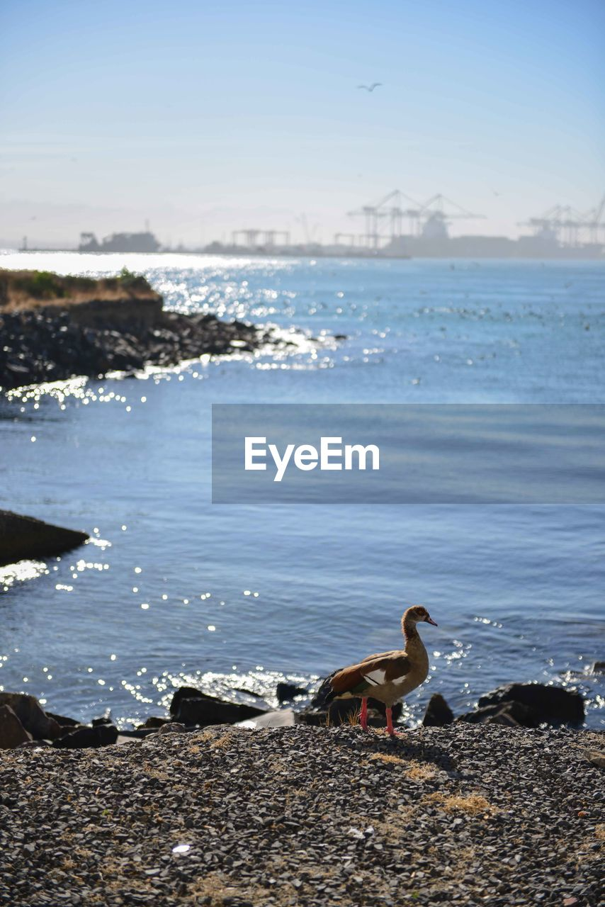 water, animal themes, animal, vertebrate, animal wildlife, sea, animals in the wild, bird, nature, beach, sky, no people, one animal, day, rock, land, beauty in nature, solid