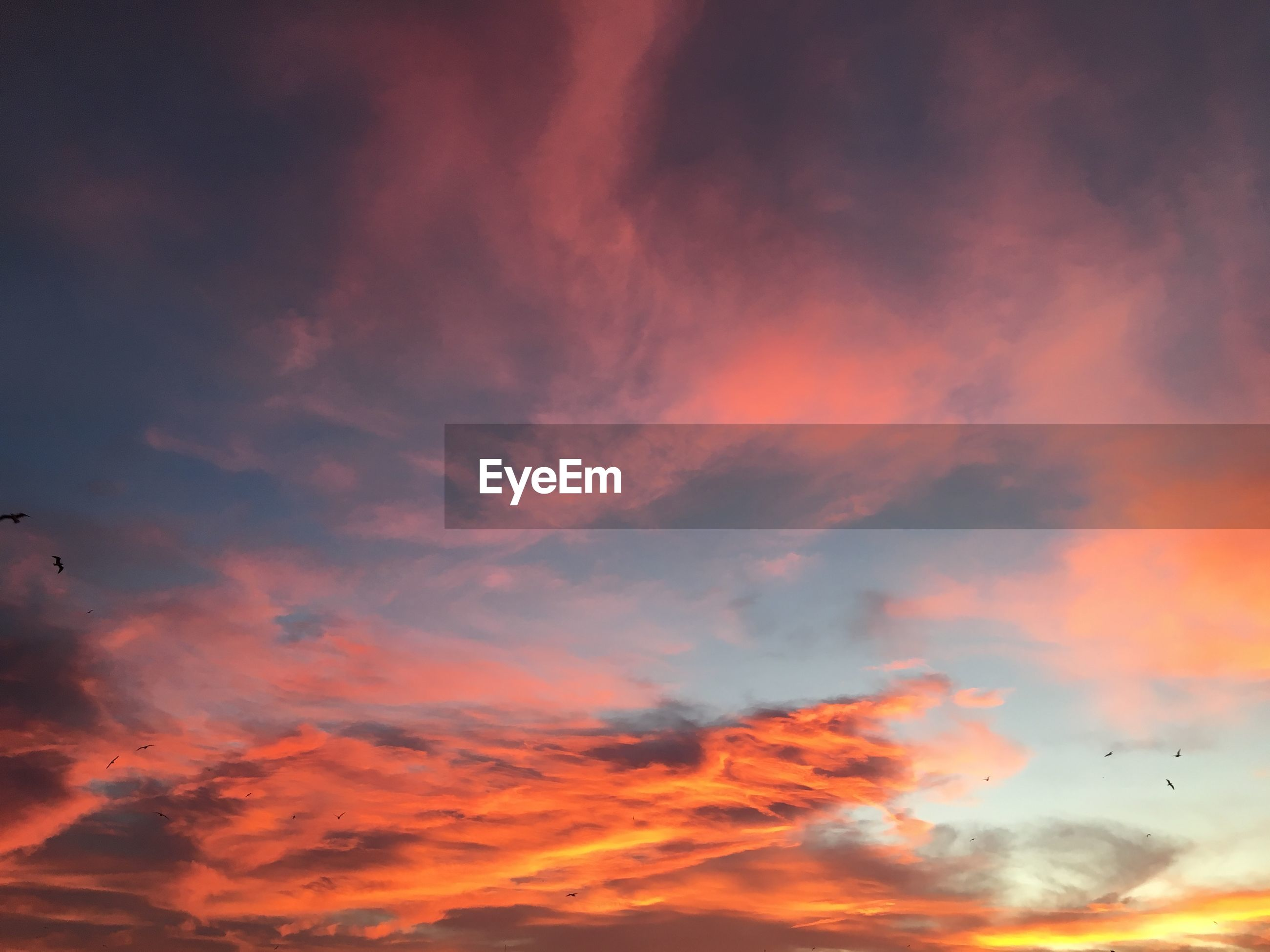 sunset, sky, low angle view, cloud - sky, orange color, beauty in nature, cloudy, scenics, tranquility, nature, tranquil scene, cloud, bird, silhouette, dramatic sky, idyllic, flying, sky only, animal themes, majestic