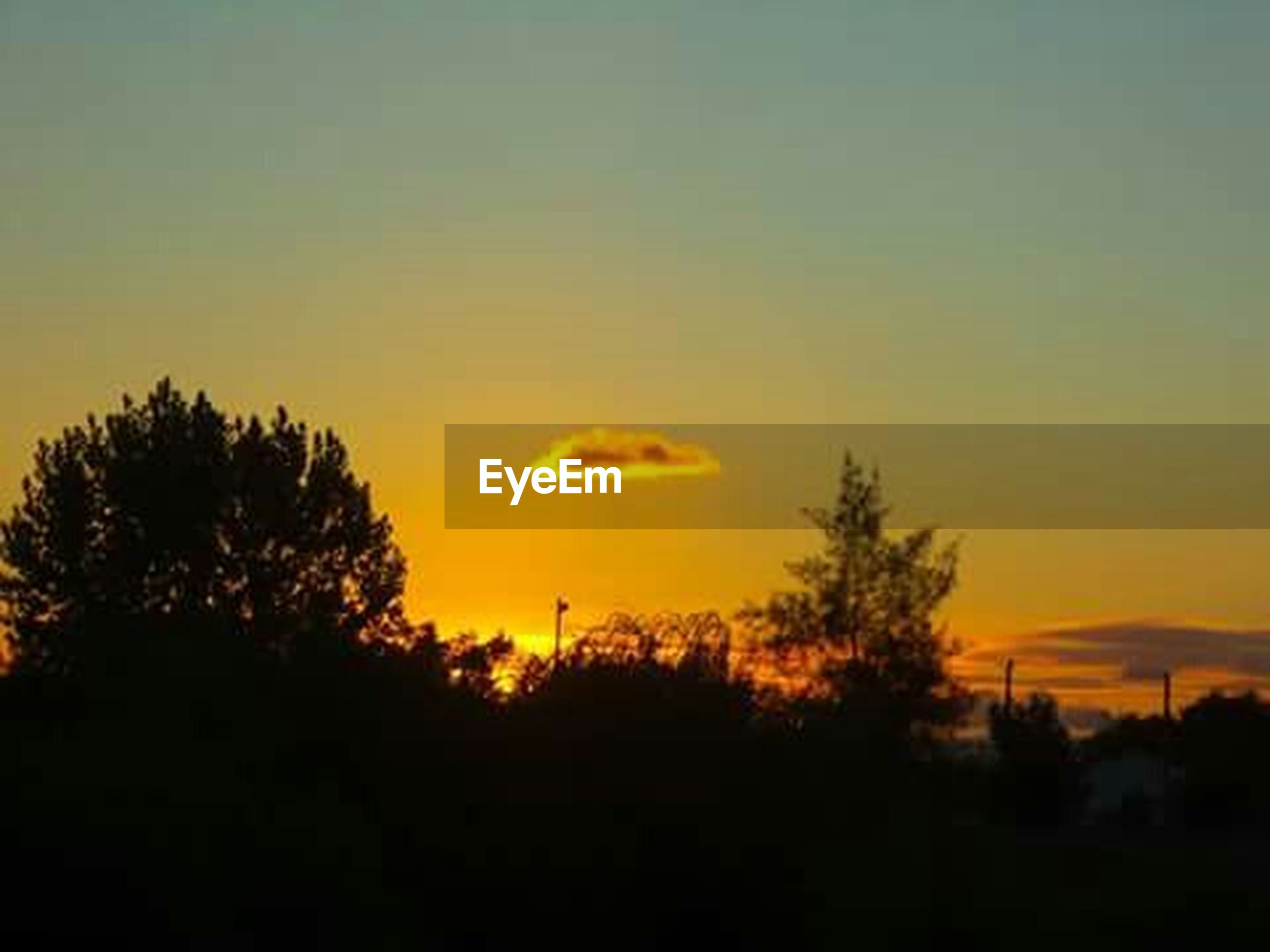 sunset, silhouette, tranquil scene, scenics, tranquility, orange color, beauty in nature, tree, sky, nature, landscape, copy space, idyllic, outdoors, no people, growth, dark, outline, non-urban scene, non urban scene