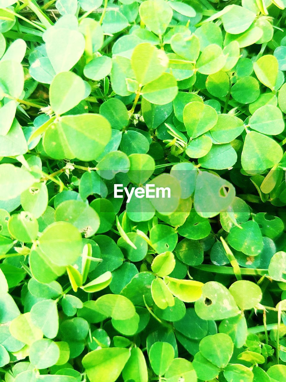 green color, leaf, growth, plant, freshness, no people, full frame, nature, backgrounds, day, outdoors, beauty in nature, fragility, close-up