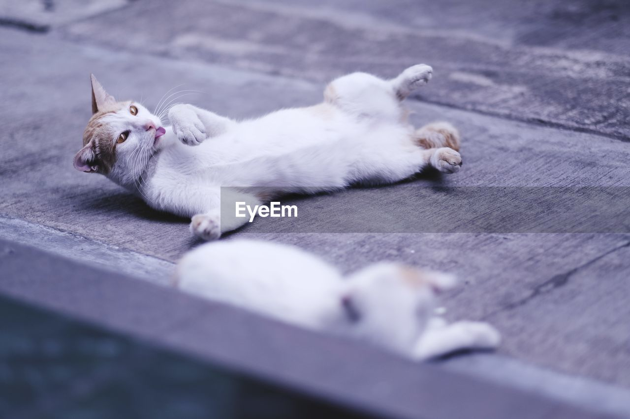 High angle view of cats relaxing on footpath