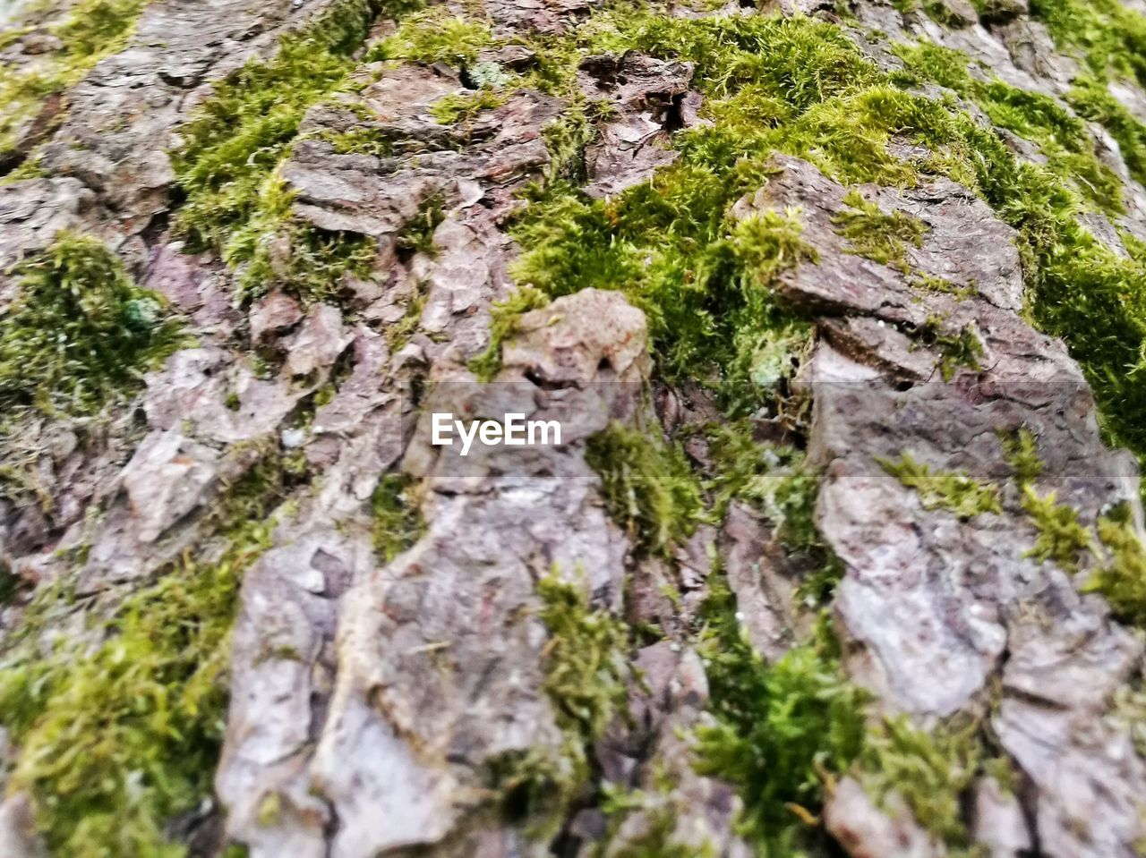rock - object, moss, textured, no people, nature, day, outdoors, growth, close-up, beauty in nature, animal themes