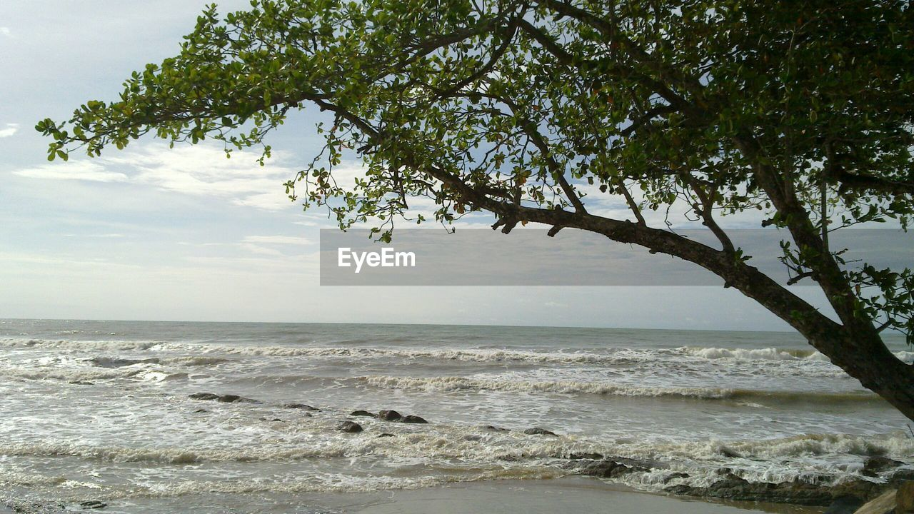 sea, tree, nature, beauty in nature, scenics, tranquility, sky, water, beach, tranquil scene, no people, outdoors, horizon over water, day, branch, scenery, wave