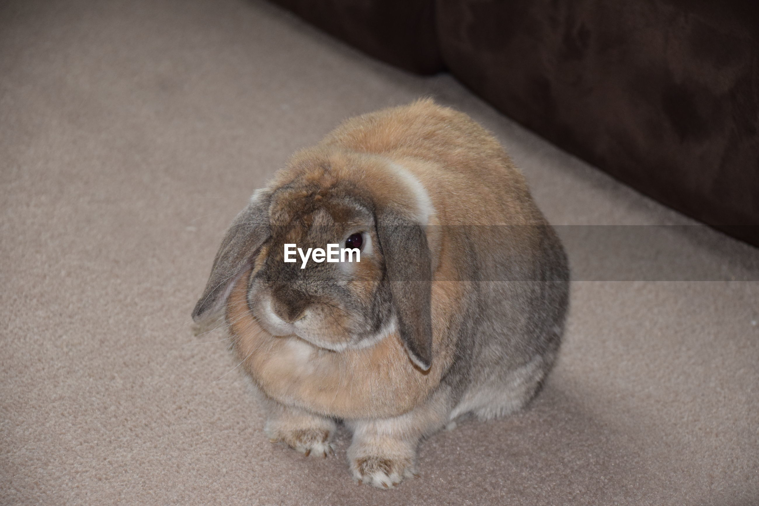 one animal, mammal, animal themes, pets, domestic animals, no people, close-up, indoors, day, portrait