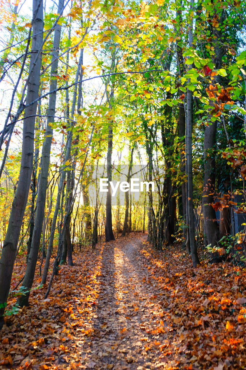 autumn, tree, plant, beauty in nature, tranquility, change, forest, leaf, land, the way forward, tranquil scene, footpath, growth, nature, plant part, scenics - nature, day, tree trunk, trunk, direction, no people, woodland, outdoors, diminishing perspective, treelined, autumn collection, leaves, fall